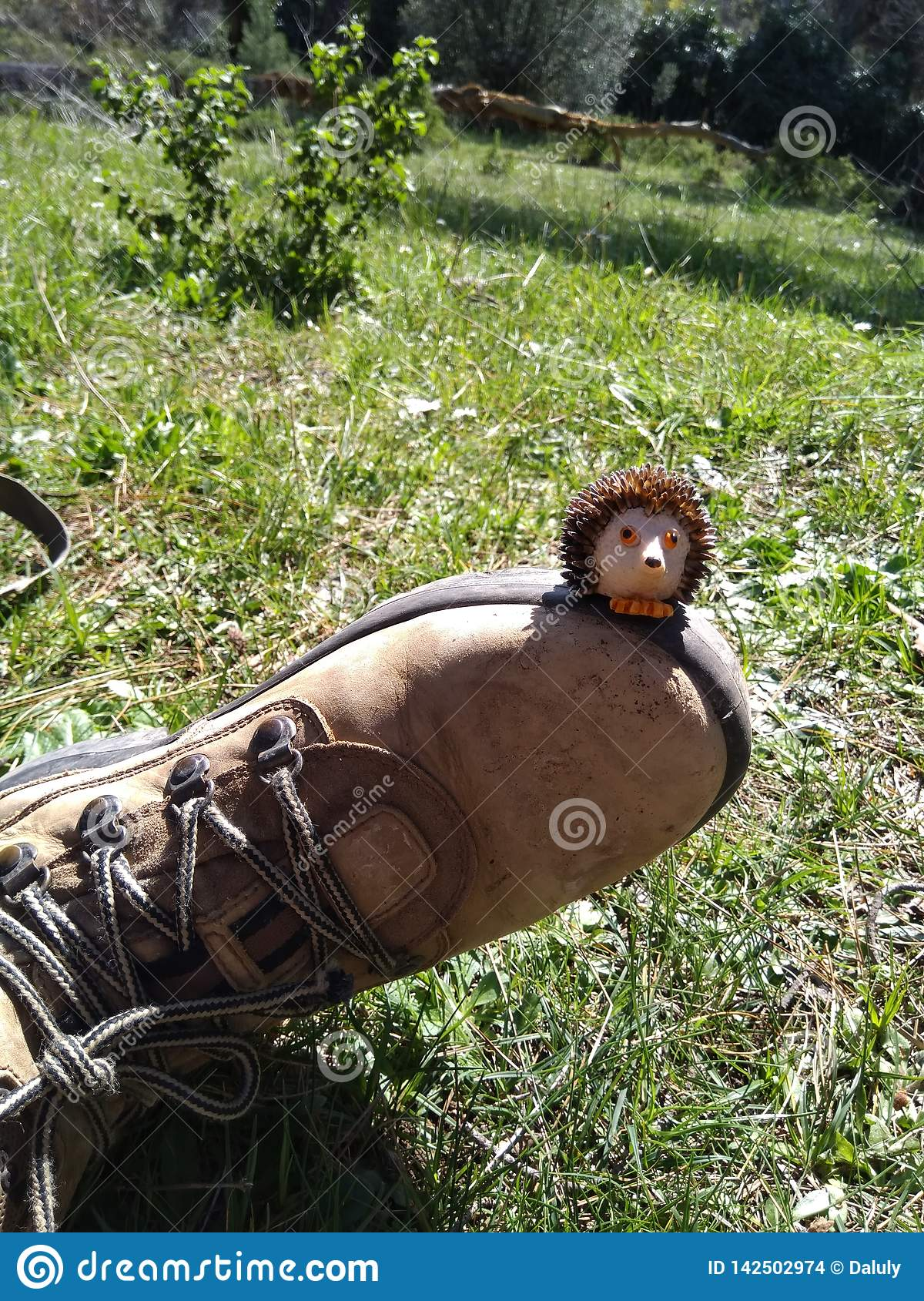 Γλυκιά μικρή συνεδρίαση σκαντζόχοιρων στο παπούτσι