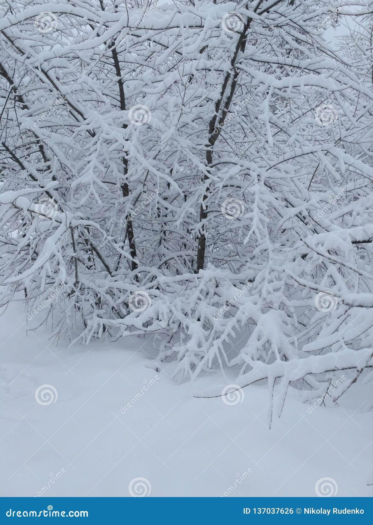 Γοητεία του χειμώνα