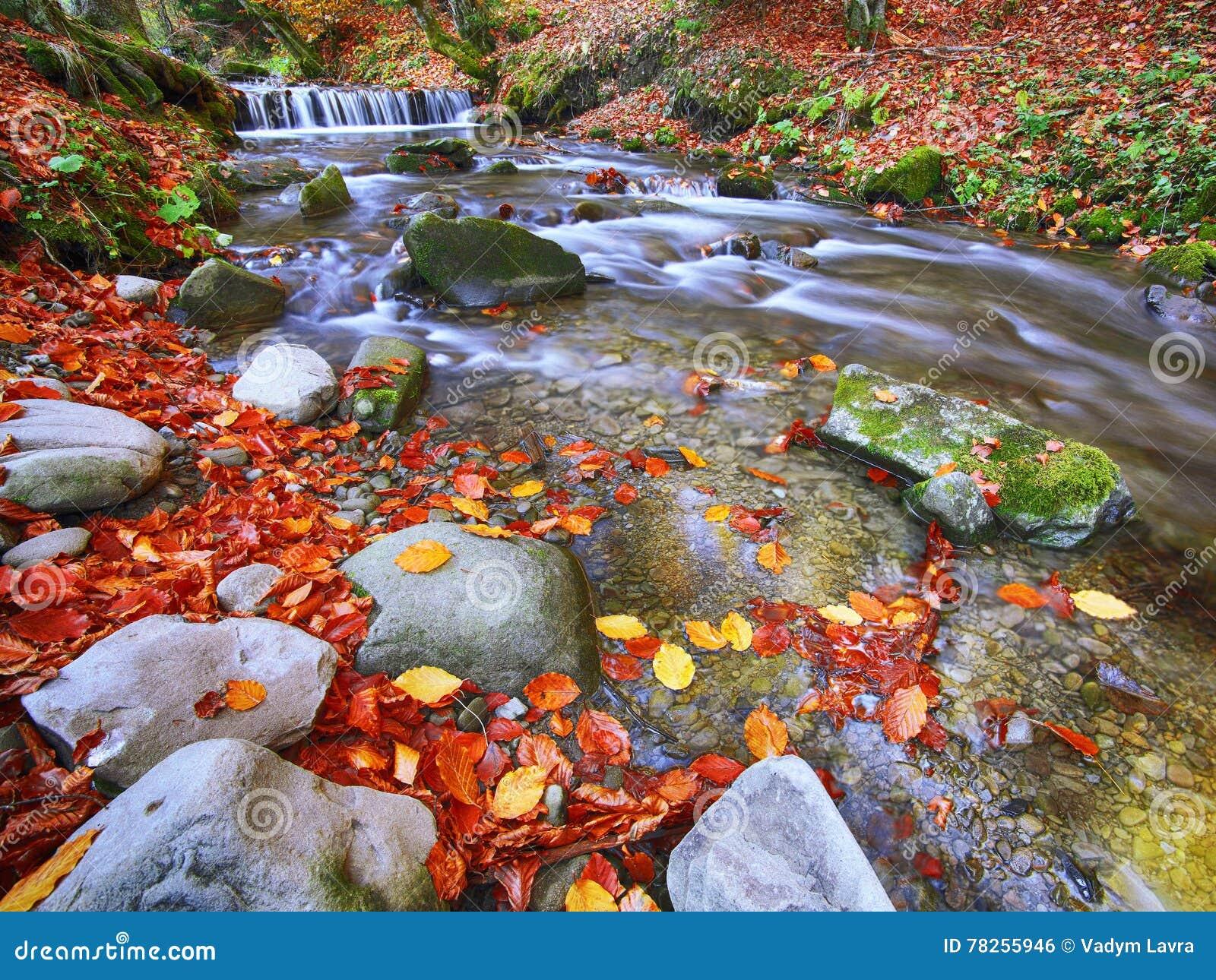 Γρήγορος ποταμός βουνών το φθινόπωρο