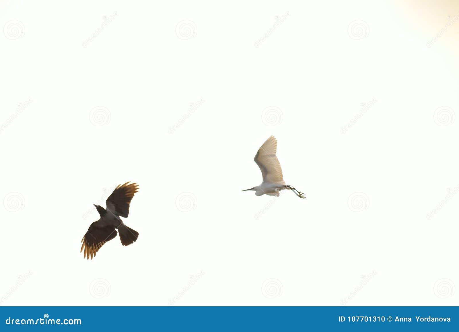 μικρό μουνί πατήσαμε με μεγάλο πουλί