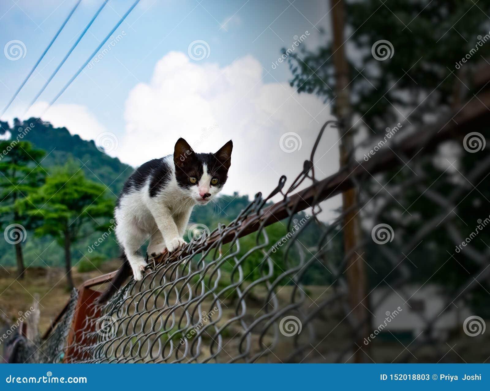 Γραπτή χαριτωμένη γάτα που περπατά στο φράκτη στον κήπο στην αστεία γάτα βουνών πολύ