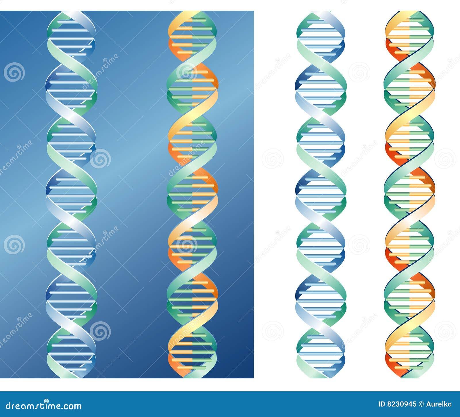 γραφική παράσταση DNA