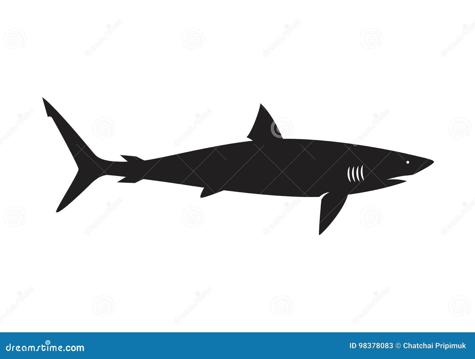 Γραφικός καρχαρίας, διάνυσμα