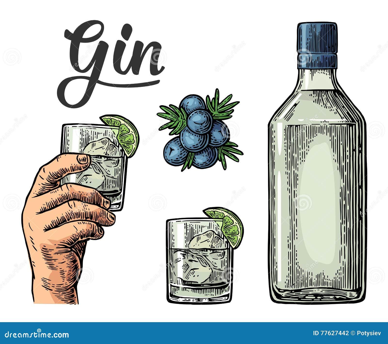 Γυαλί και μπουκάλι του τζιν και κλάδος του ιουνιπέρου με τα μούρα