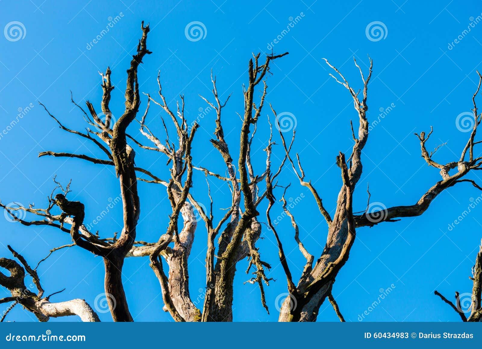 γυμνό δέντρο
