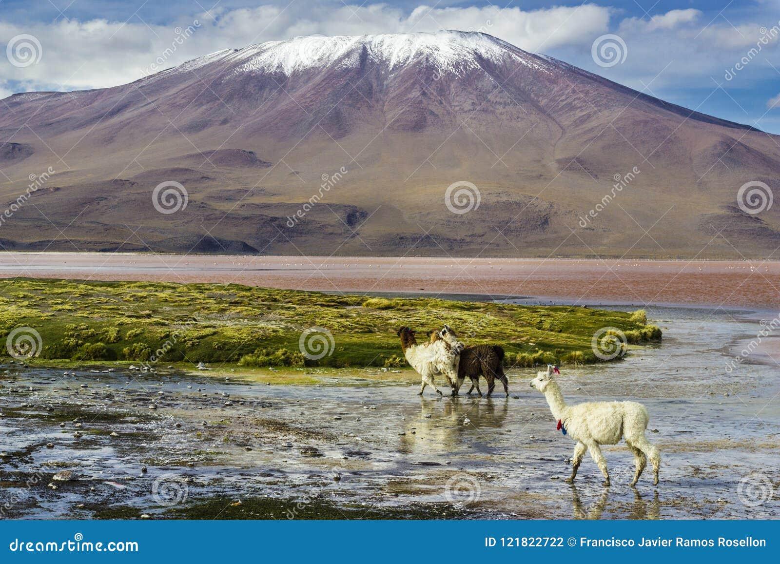 Γύρος Uyuni γύρω από τις λίμνες και τα ηφαίστεια των βολιβιανών Άνδεων ένα καταπληκτικό ταξίδι