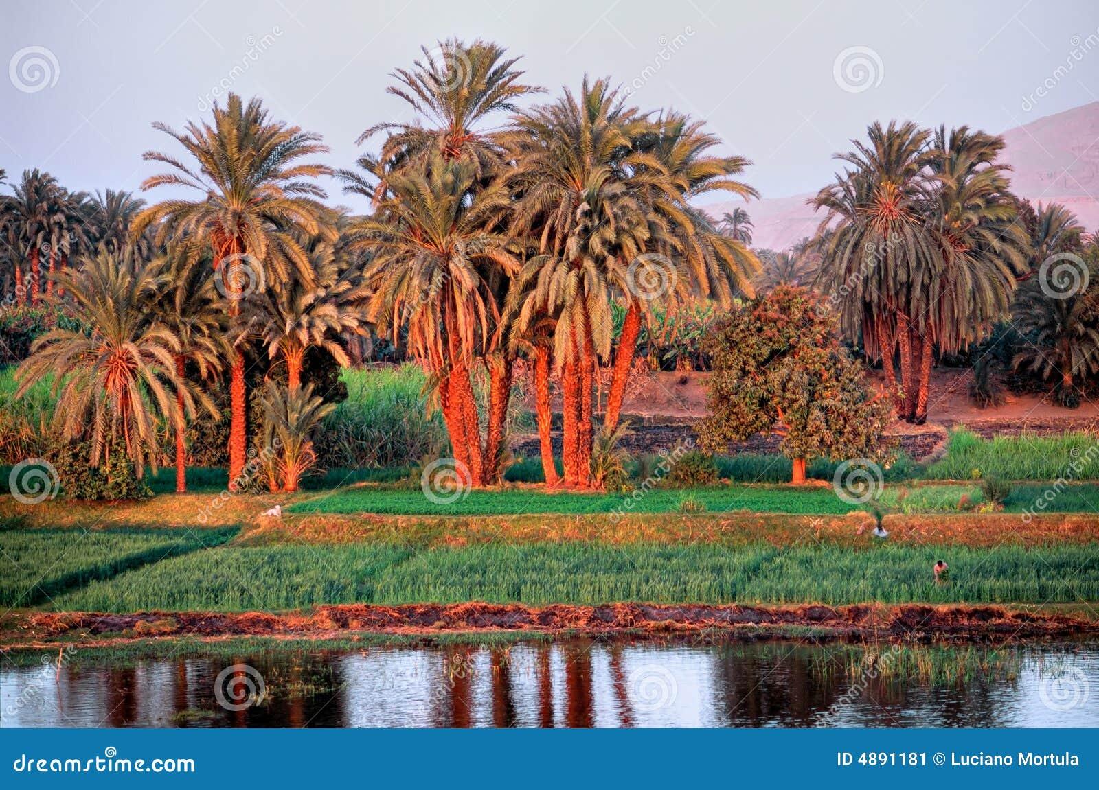 γύρω από το aswan ποταμό του Νεί&lamb