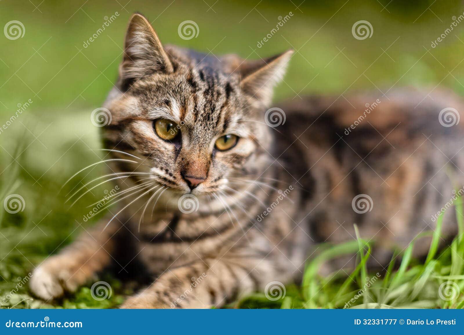 Γλυκιά γάτα