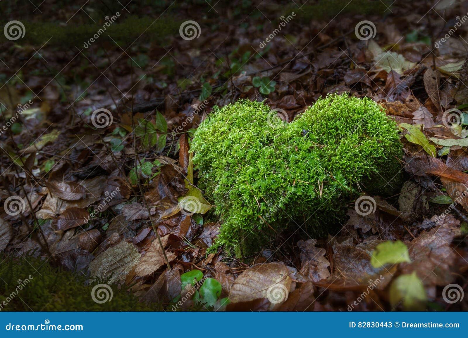 Δάπεδο τζακιού φύσης στο δάσος