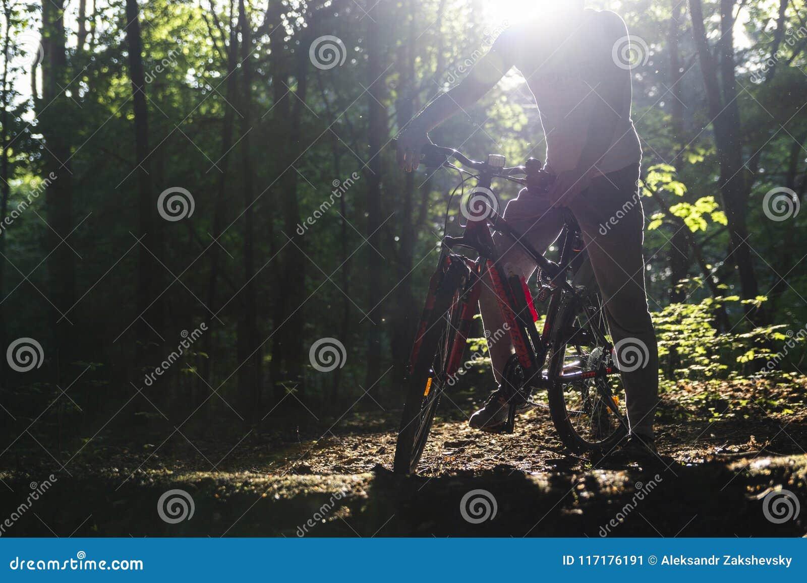 Δάσος αθλητικών ποδηλάτων την άνοιξη στις ακτίνες του φωτός του ήλιου