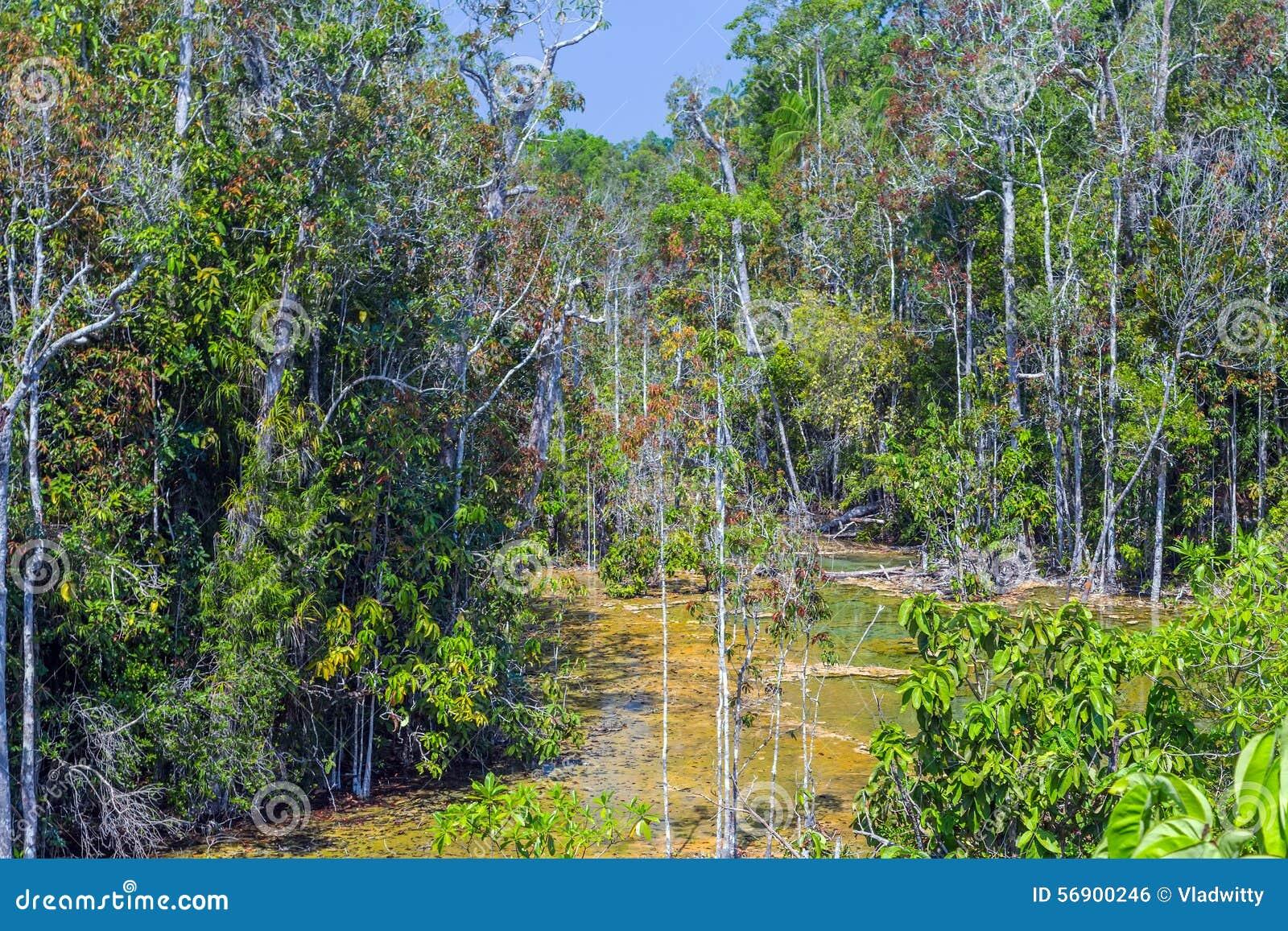 Δάσος μαγγροβίων σε Krabi στην Ταϊλάνδη