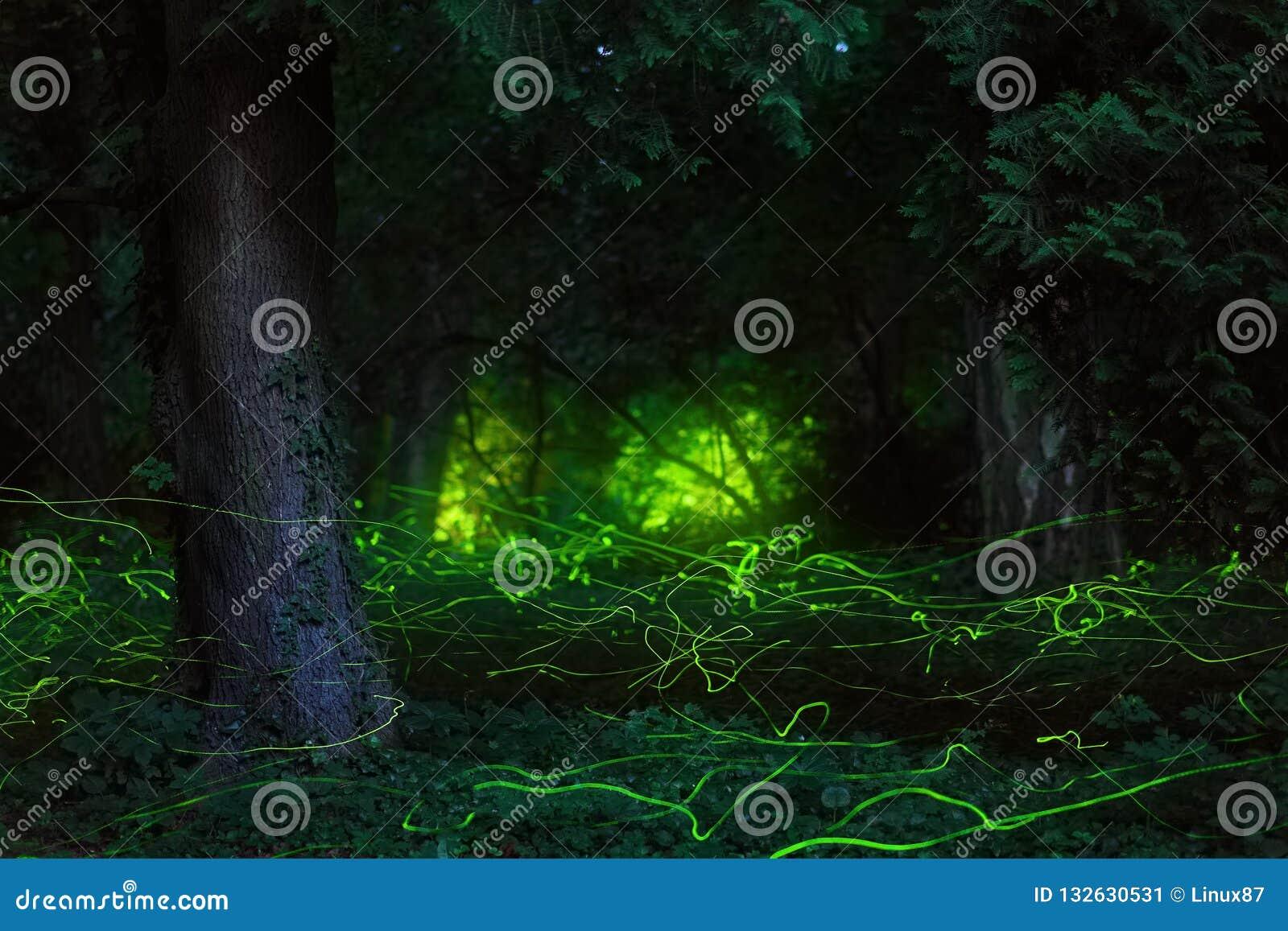 Δάσος νύχτας σκηνής παραμυθιού fireflies