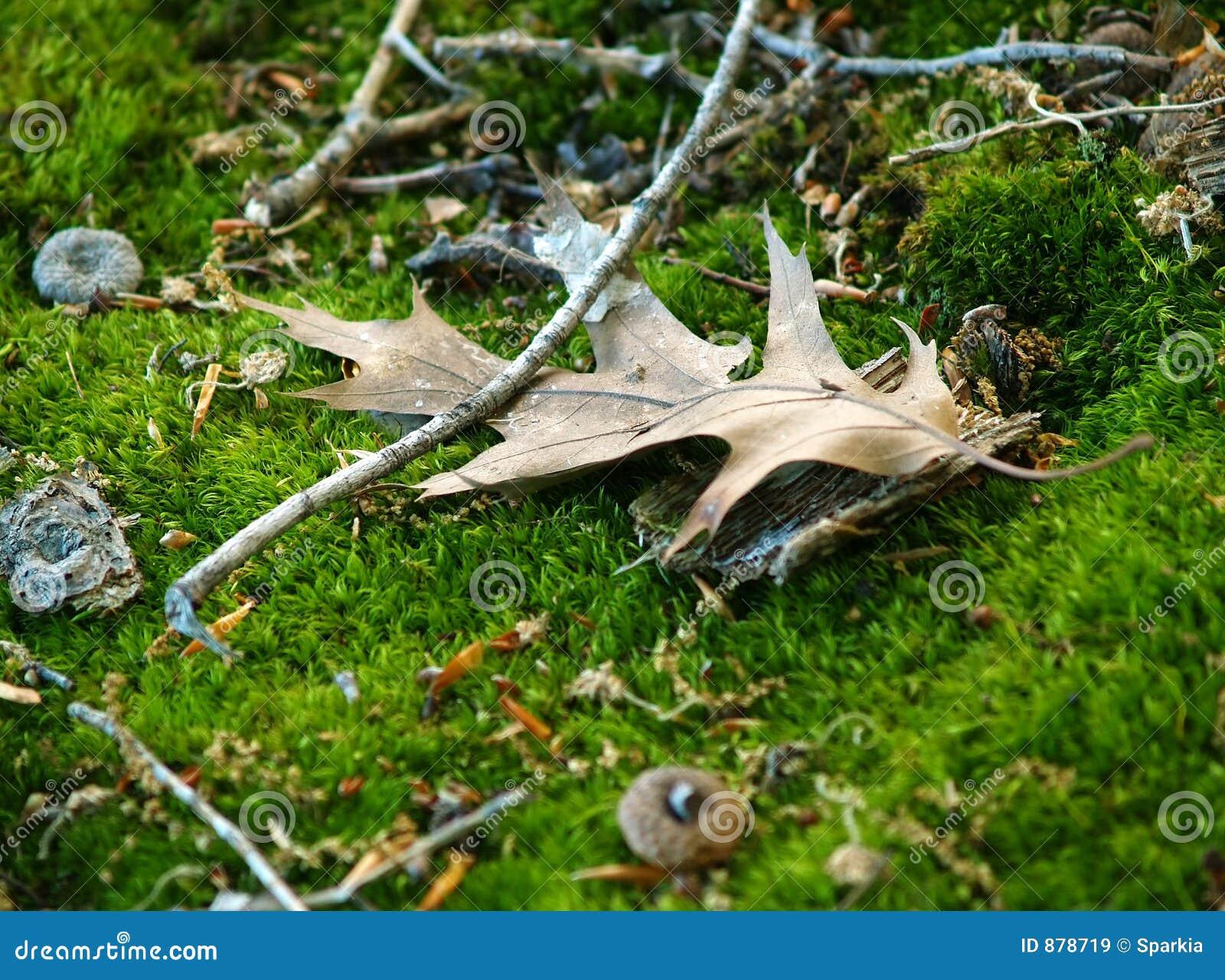 δάσος πατωμάτων λεπτομερ