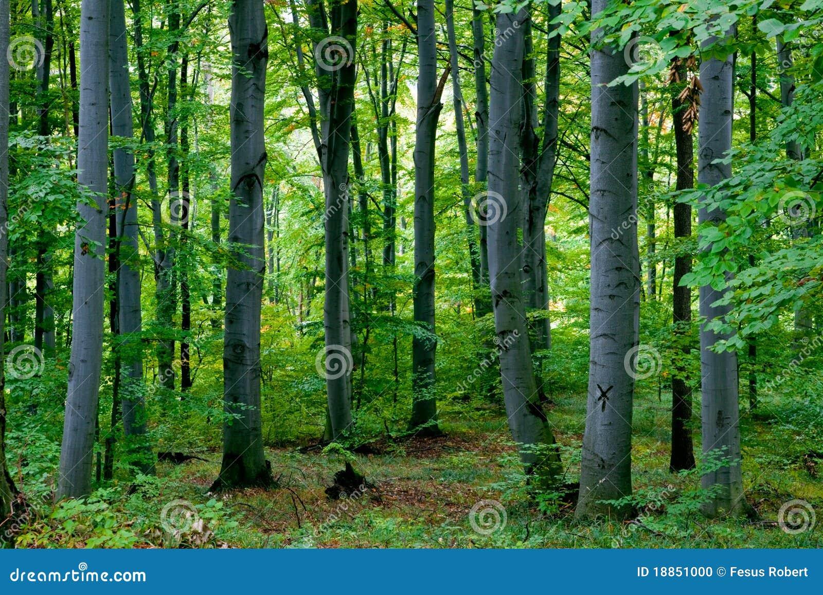 δάσος πράσινο