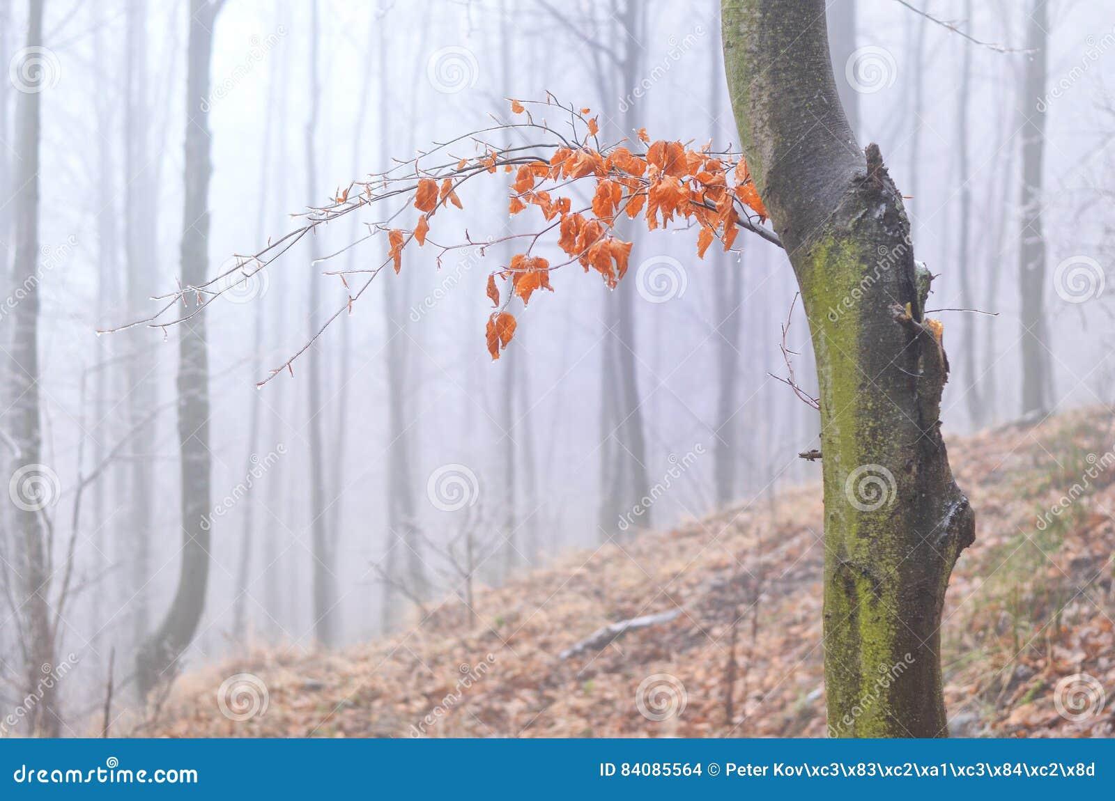 Δάσος πρωινού φθινοπώρου με την ηλιοφάνεια, Σλοβακία
