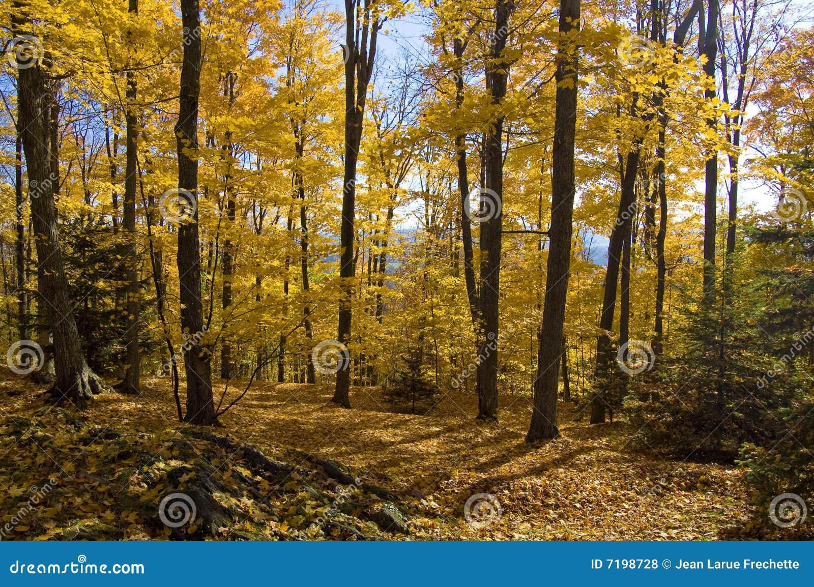 δάσος πτώσης χρυσό