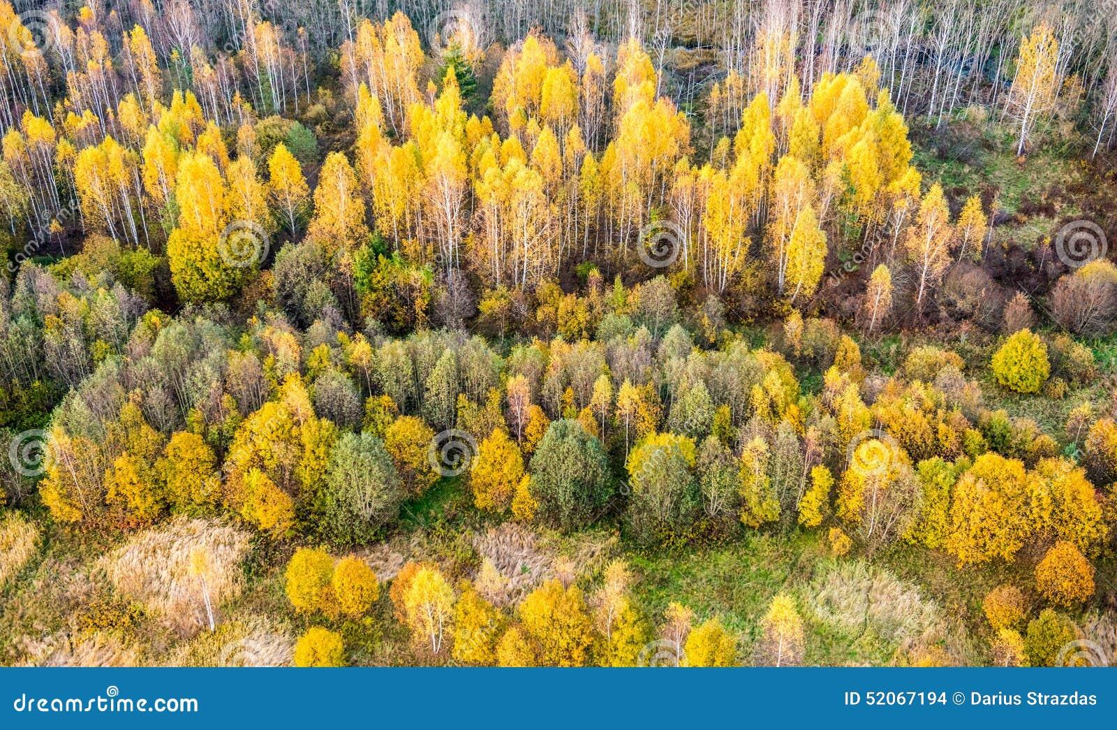 Δάσος πτώσης