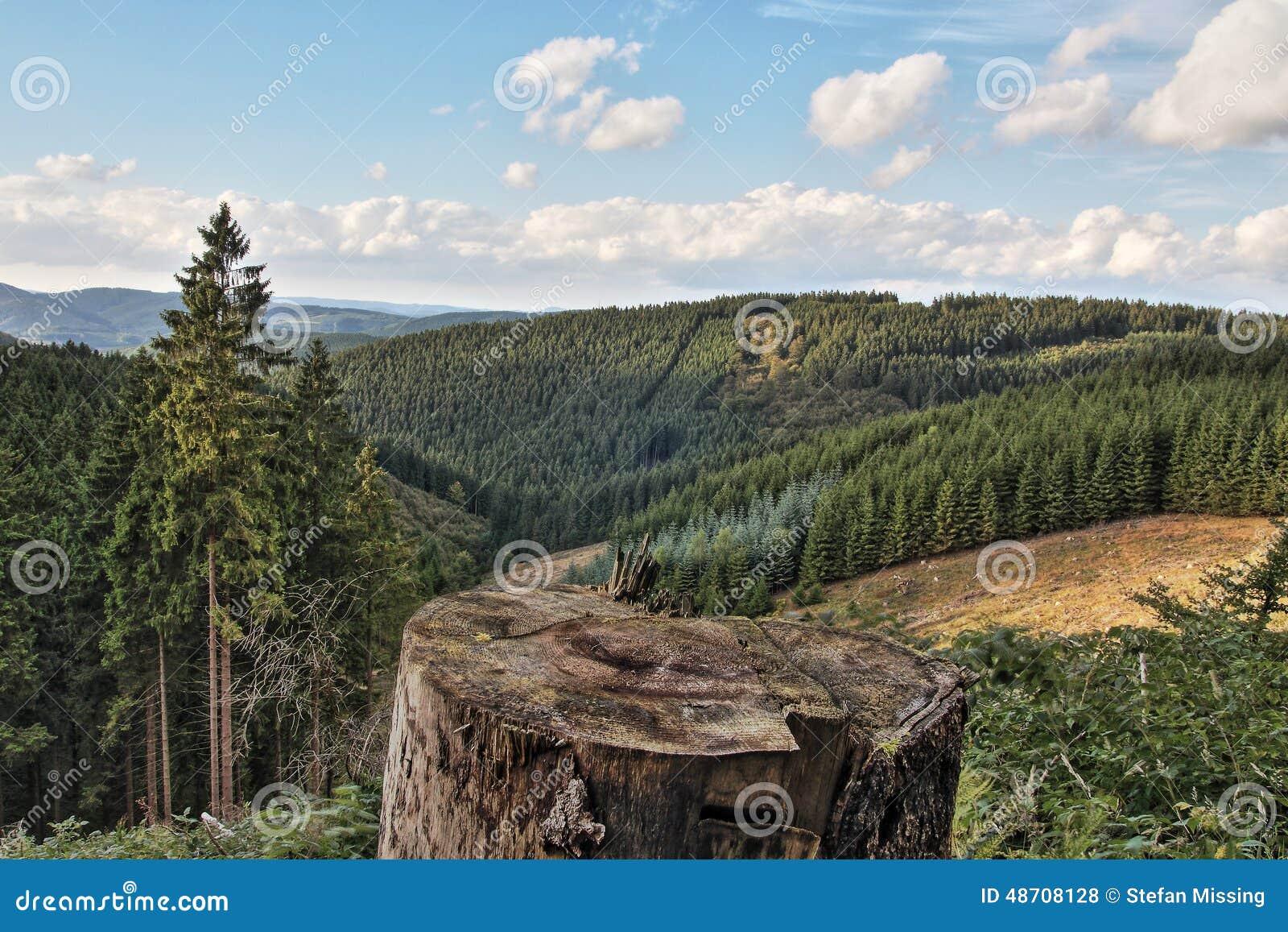 Δάσος σε Sauerland, Γερμανία, Ευρώπη
