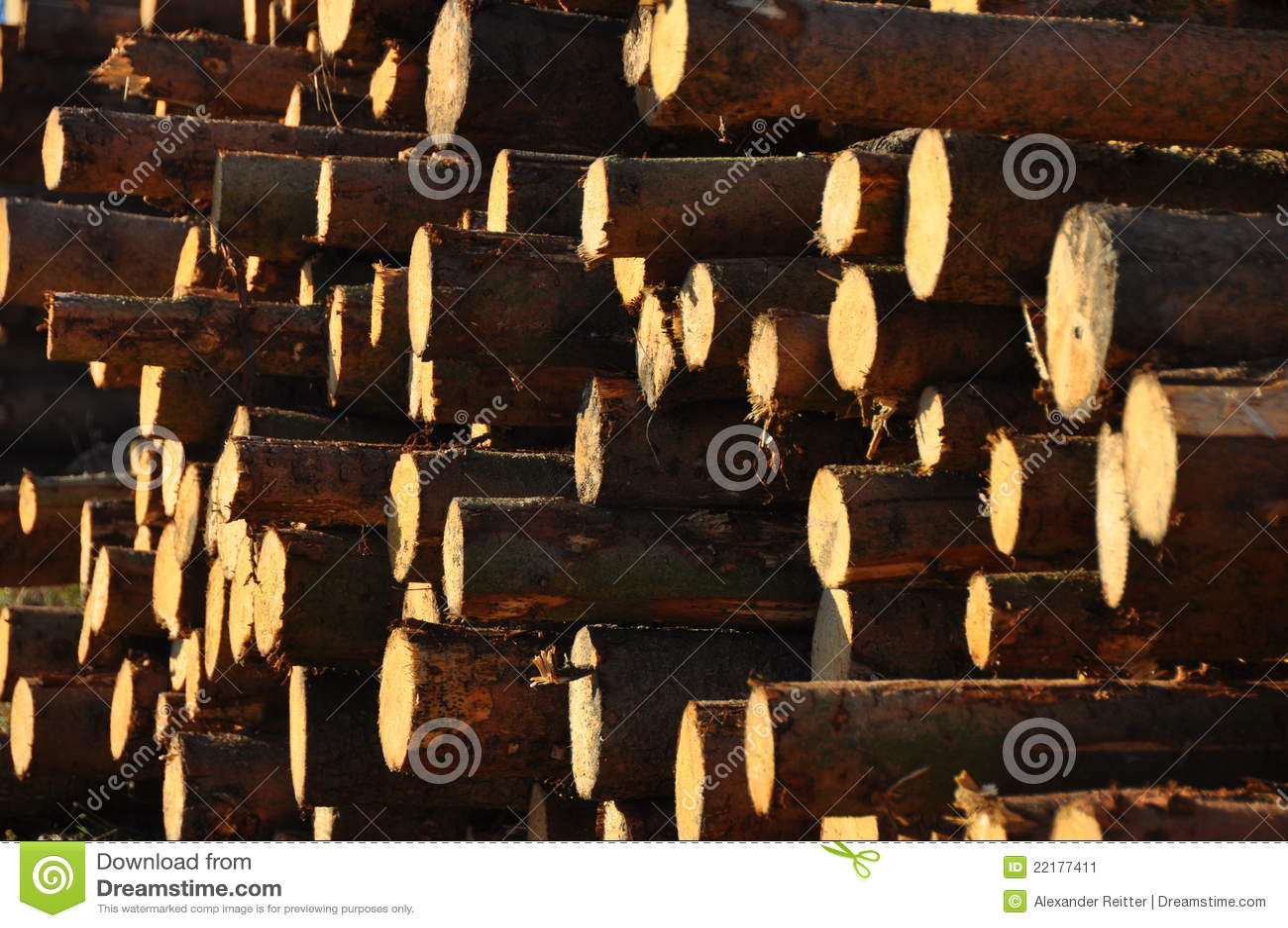 δάσος σωρών
