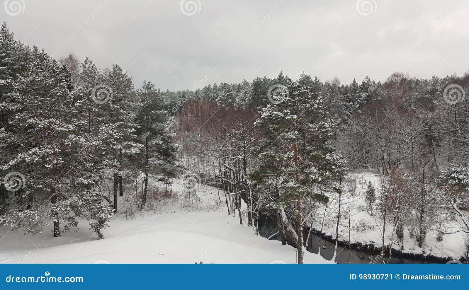 Δάσος το χειμώνα
