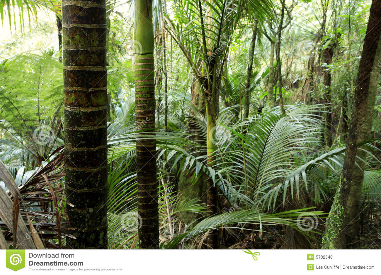 δάσος τροπικό