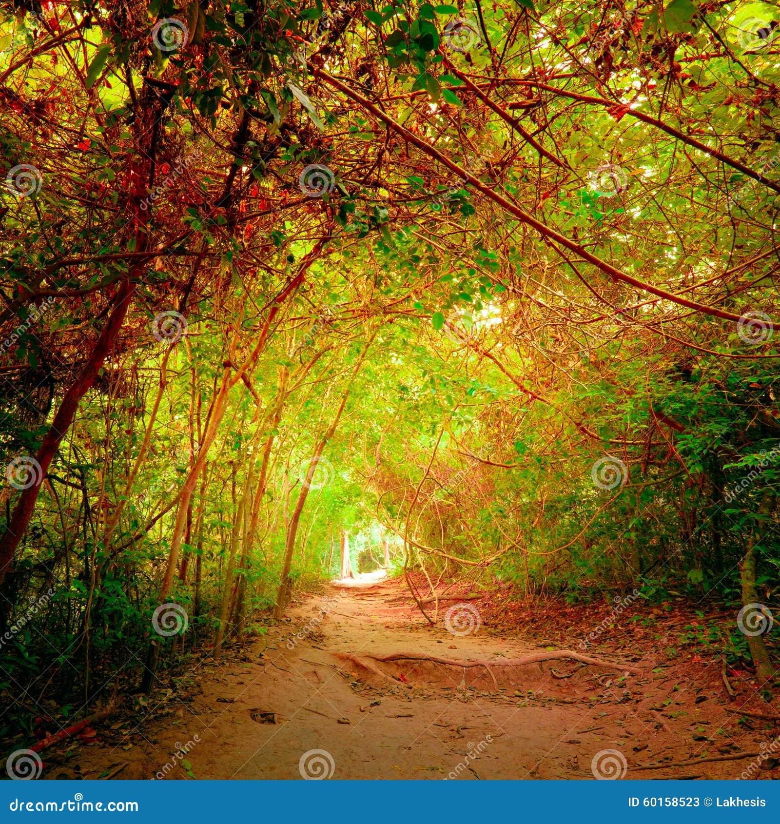 Δάσος φαντασίας στα χρώματα φθινοπώρου με τον τρόπο σηράγγων και πορειών