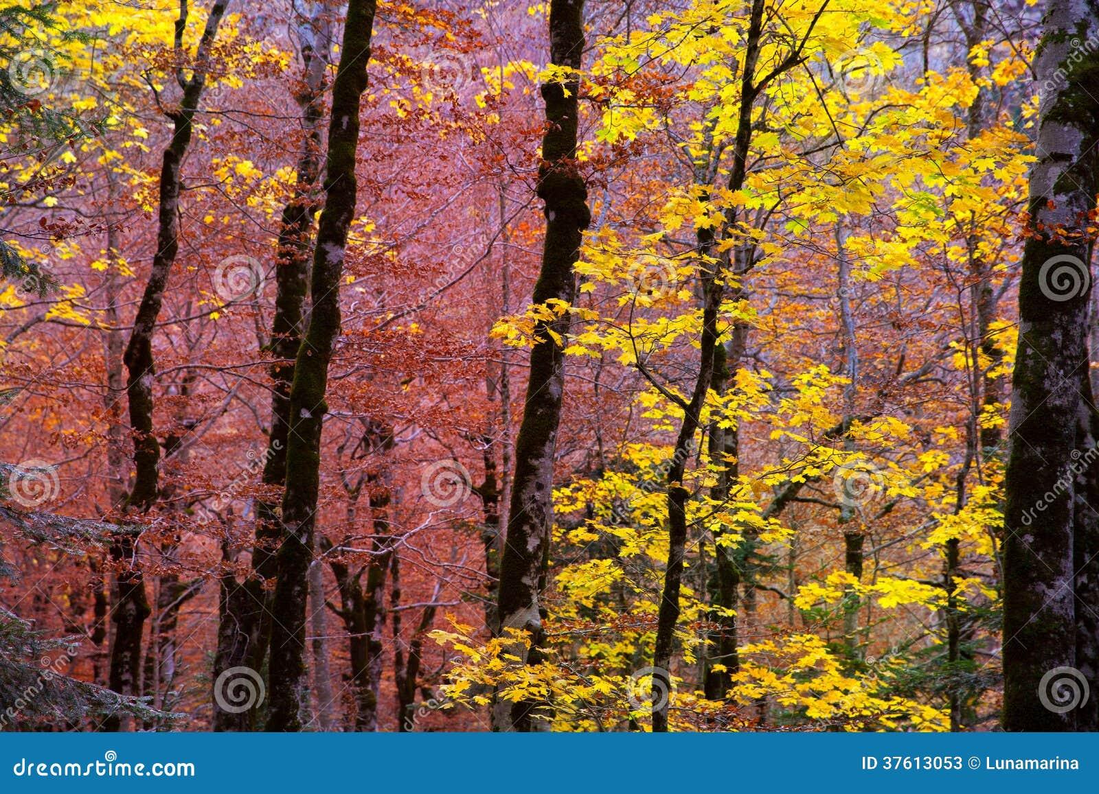 Δάσος φθινοπώρου στα Πυρηναία Valle de Ordesa Huesca Ισπανία