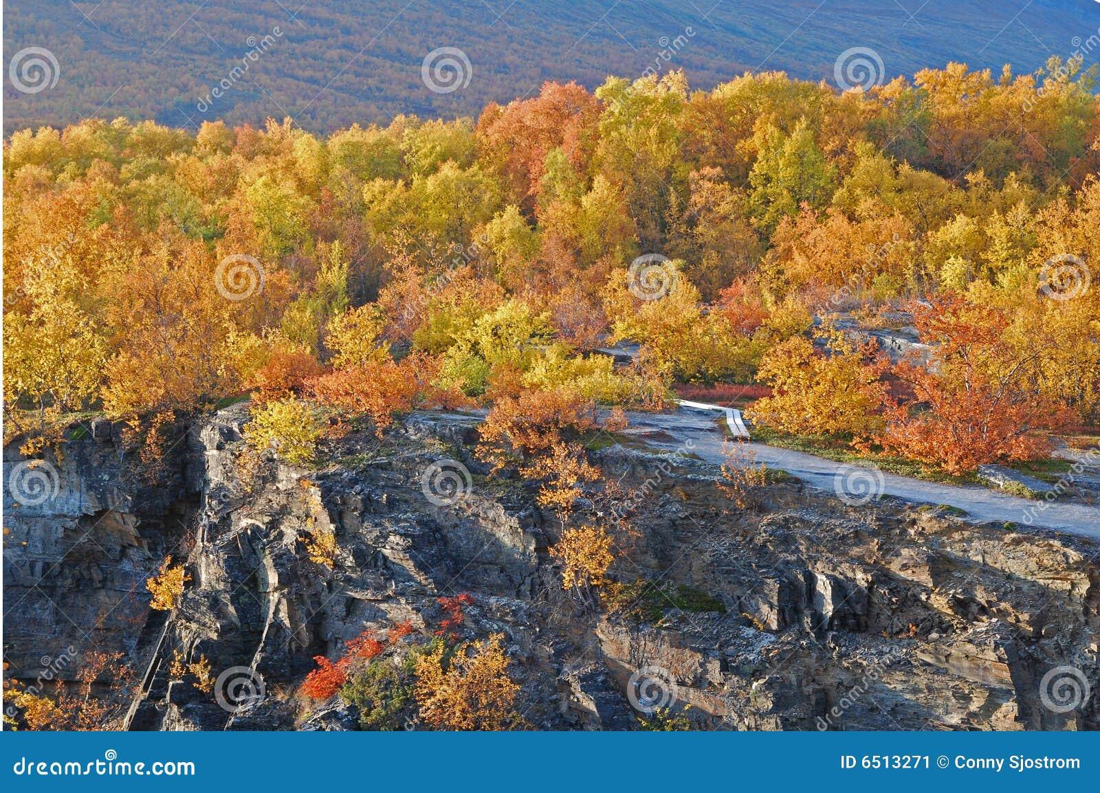 δάσος φθινοπώρου φυσικό