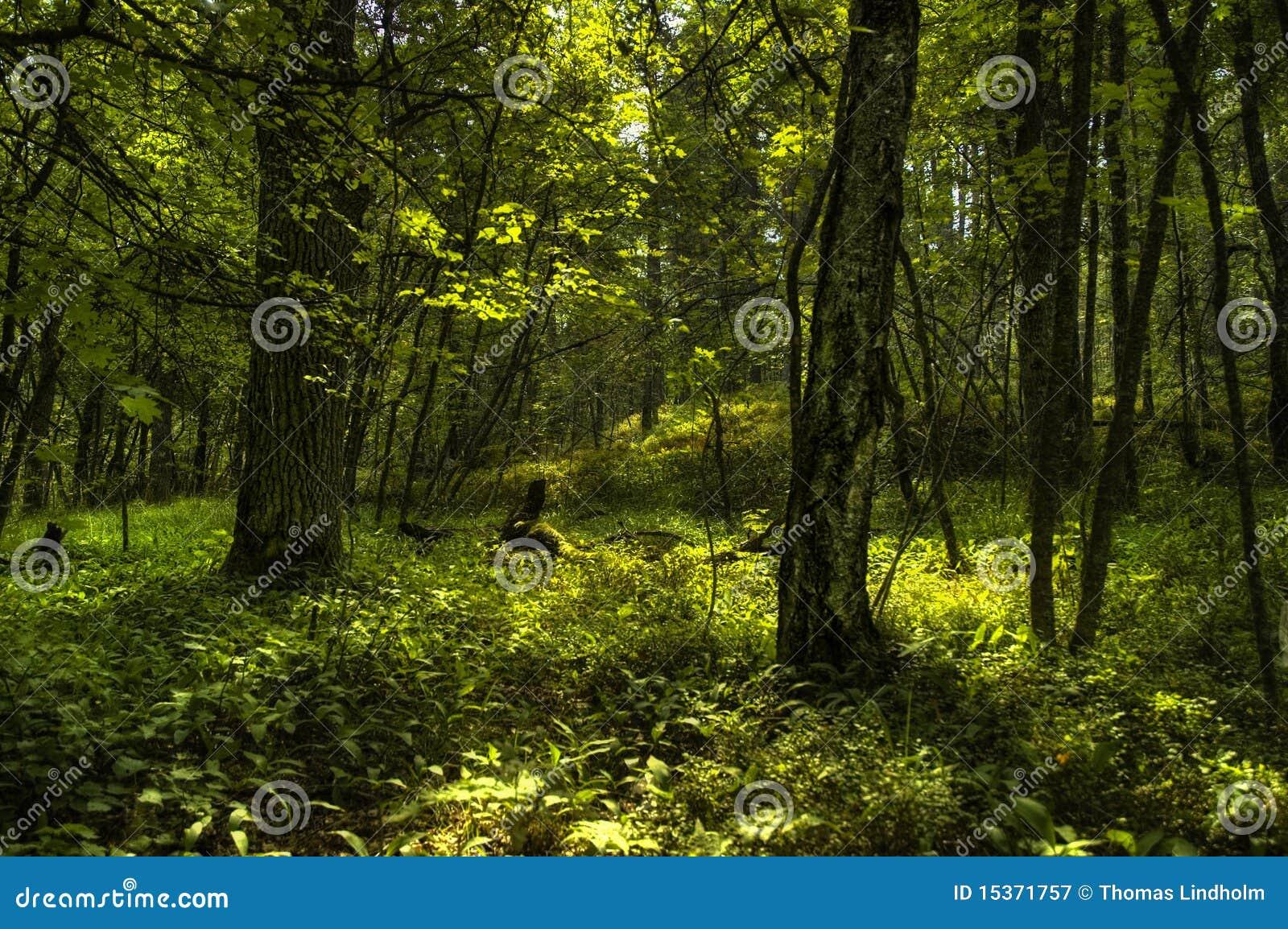 Δάσος Elvish
