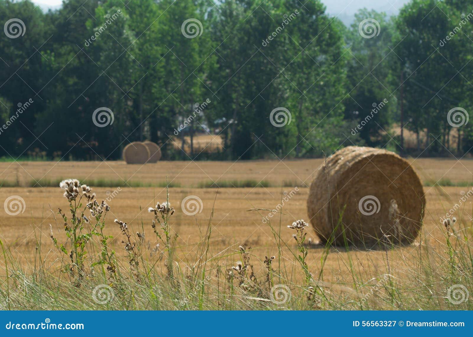 Download Δέματα αχύρου στον τομέα στοκ εικόνα. εικόνα από αγροτικός - 56563327