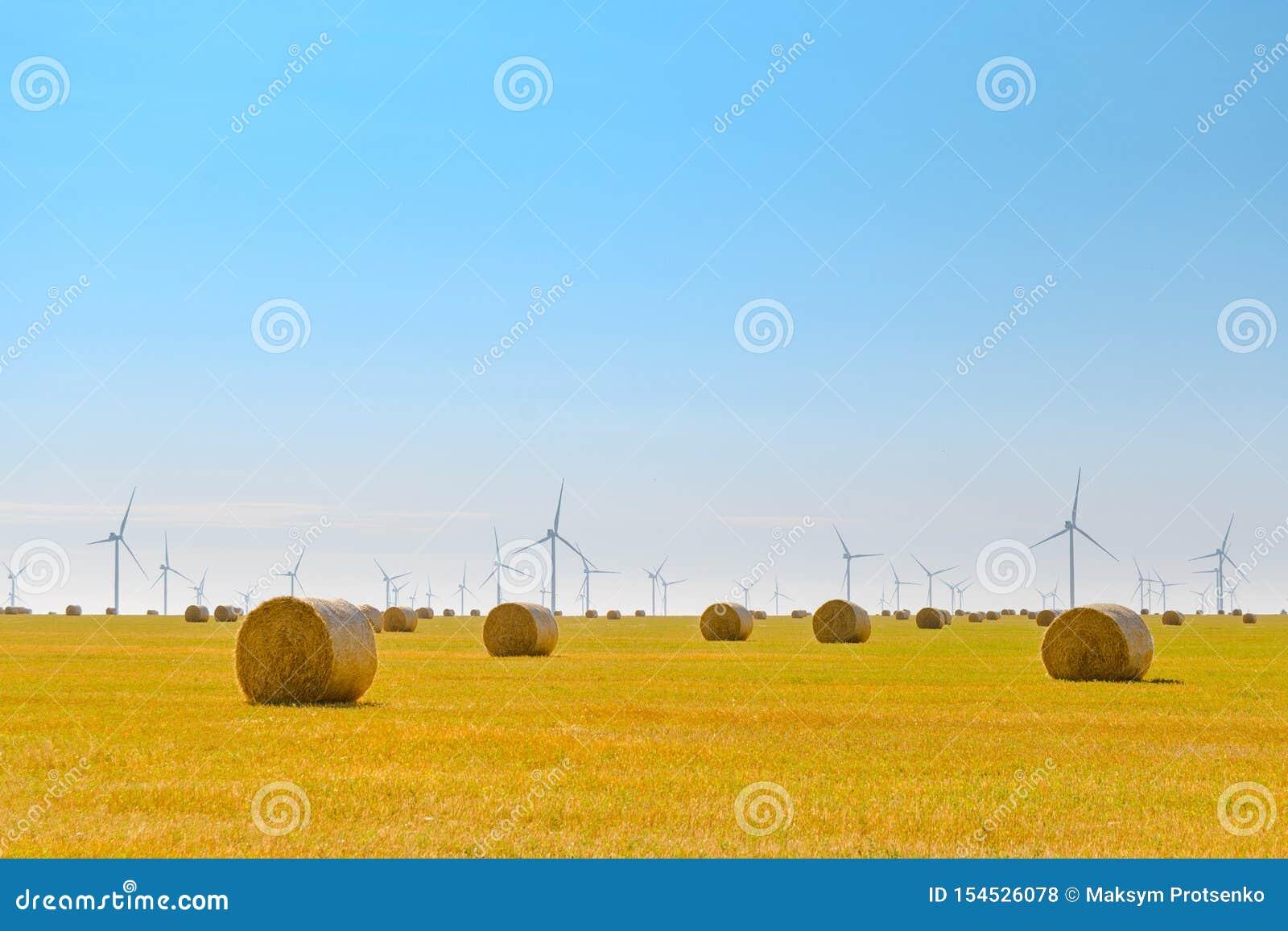 Δέματα αχύρου στο φωτεινό κίτρινο τομέα κάτω από το μπλε ουρανό Στρόβιλοι γεννητριών αέρα στο υπόβαθρο