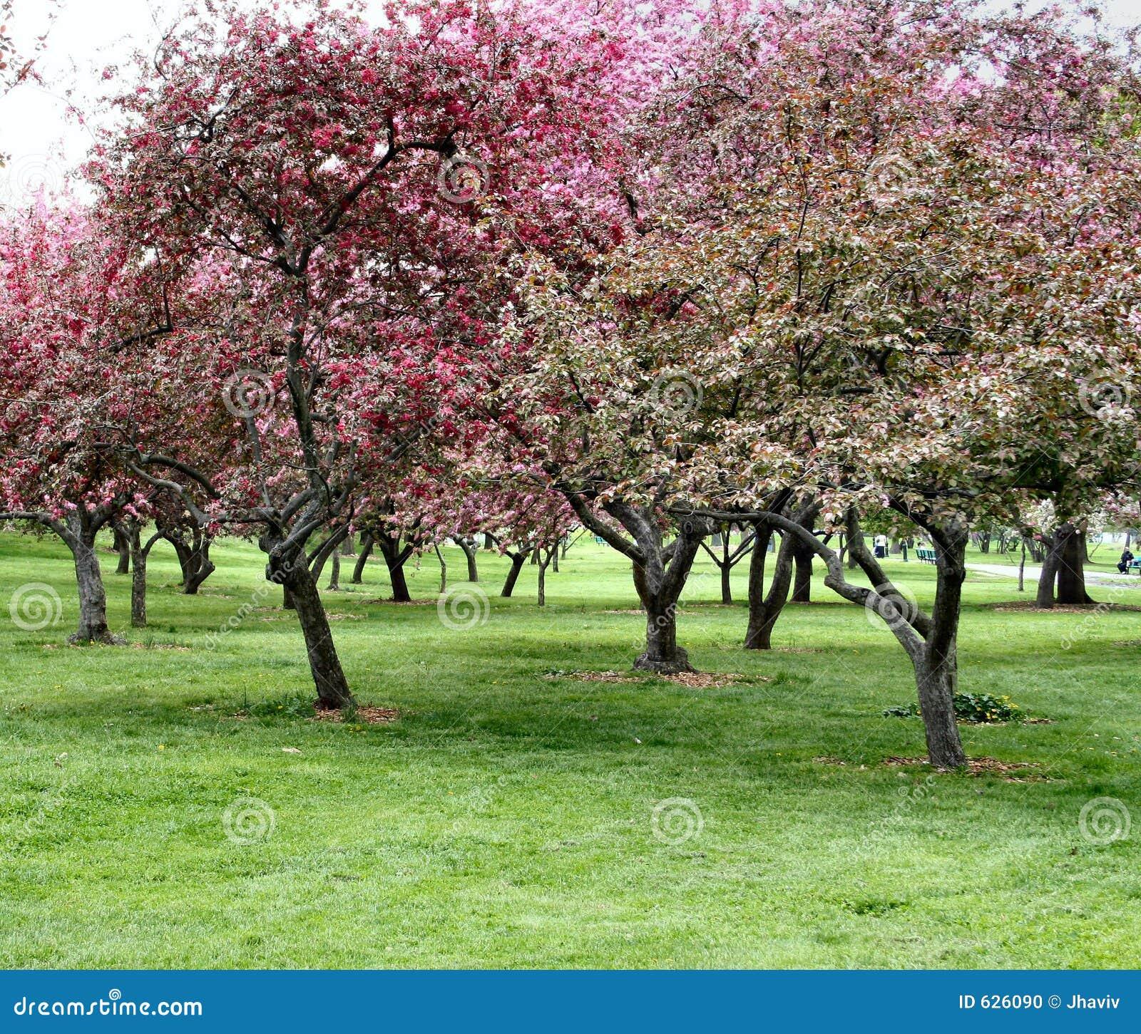δέντρα άνθισης