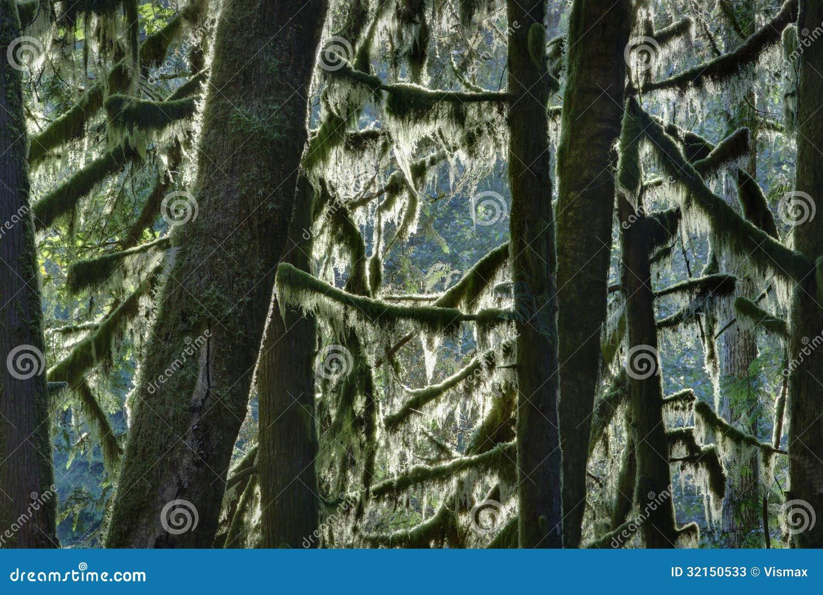 Δέντρα βρύου, Pacific Northwest