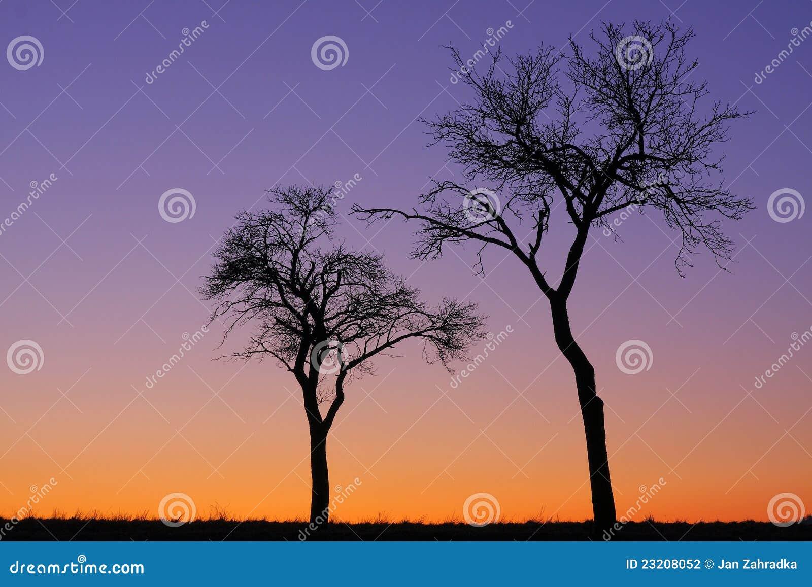 δέντρα δύο