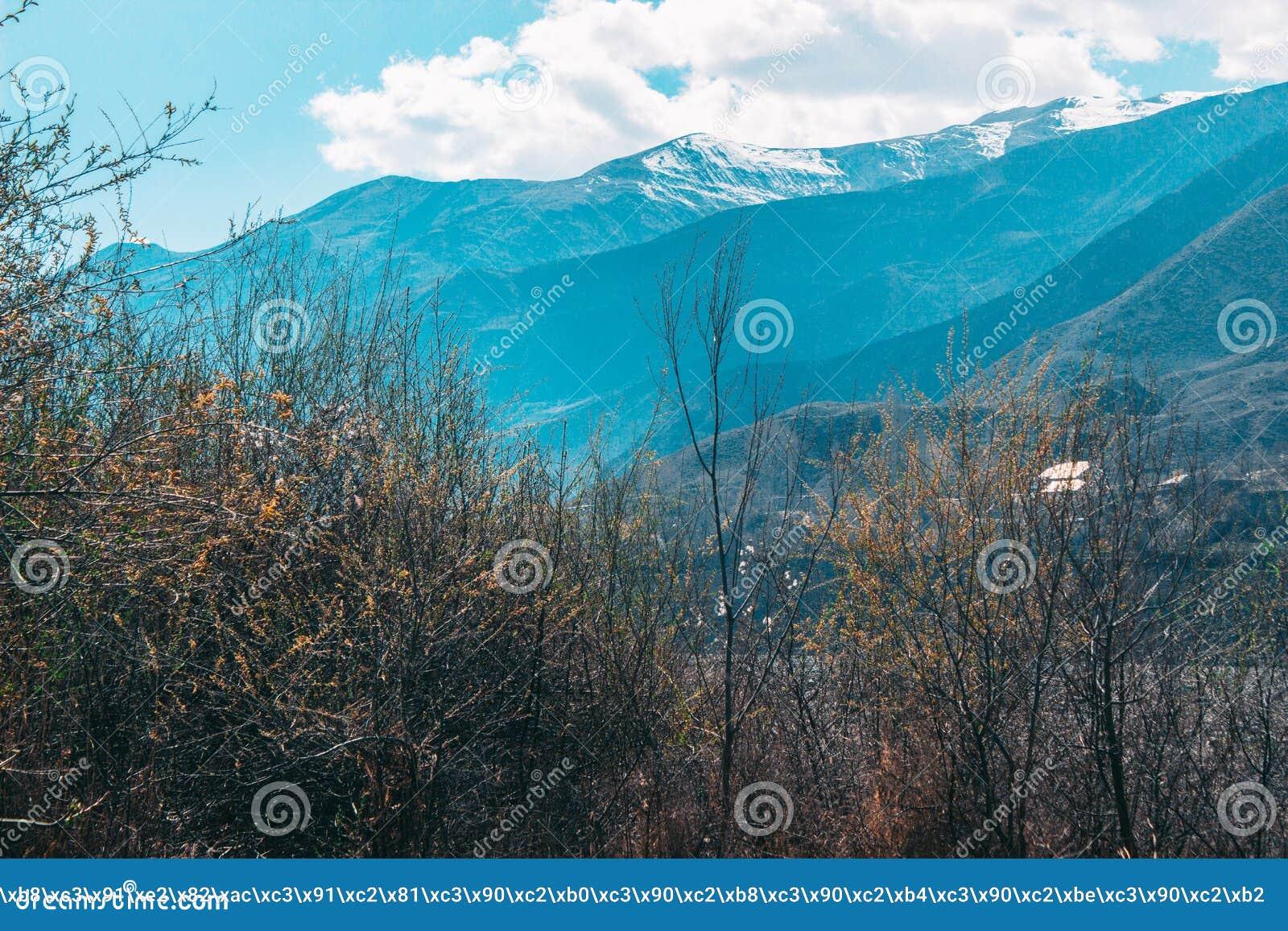 Δέντρα ενάντια στον ουρανό και τα βουνά