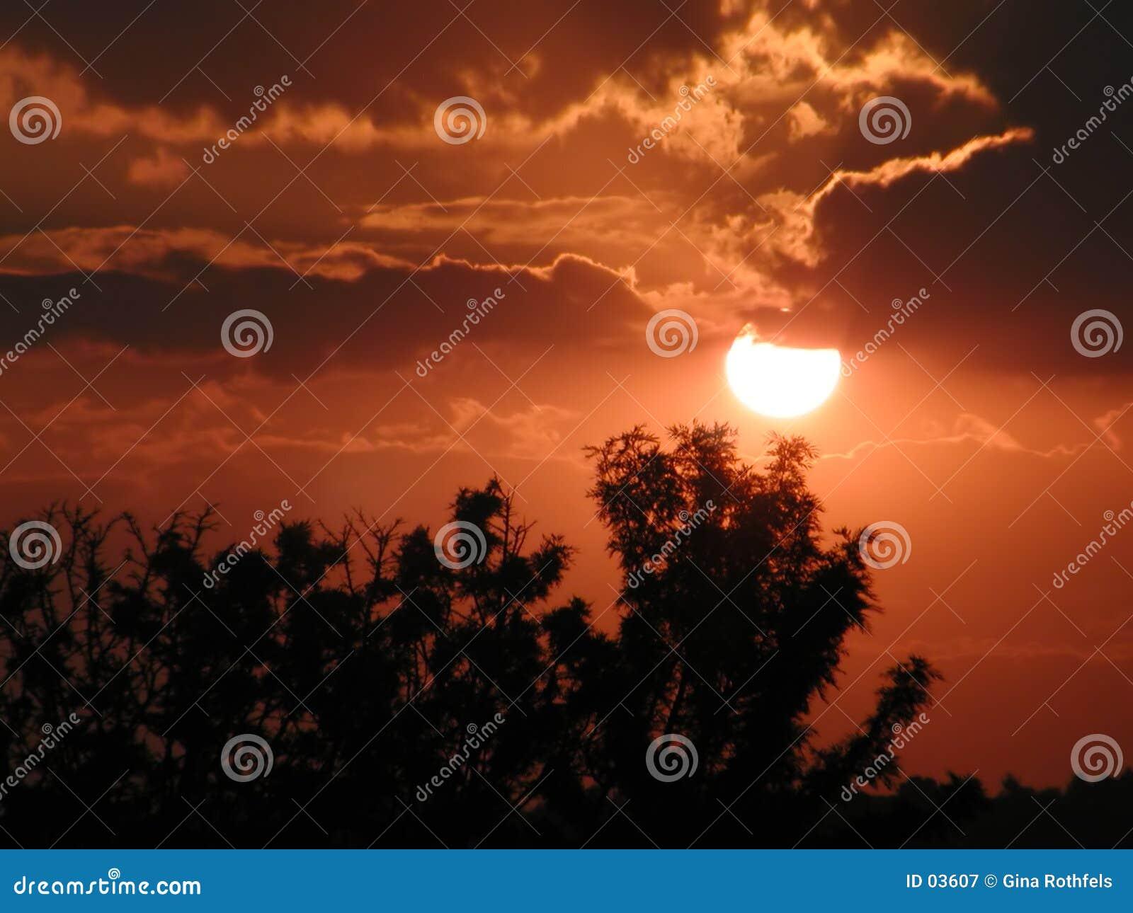 δέντρα ηλιοβασιλέματος