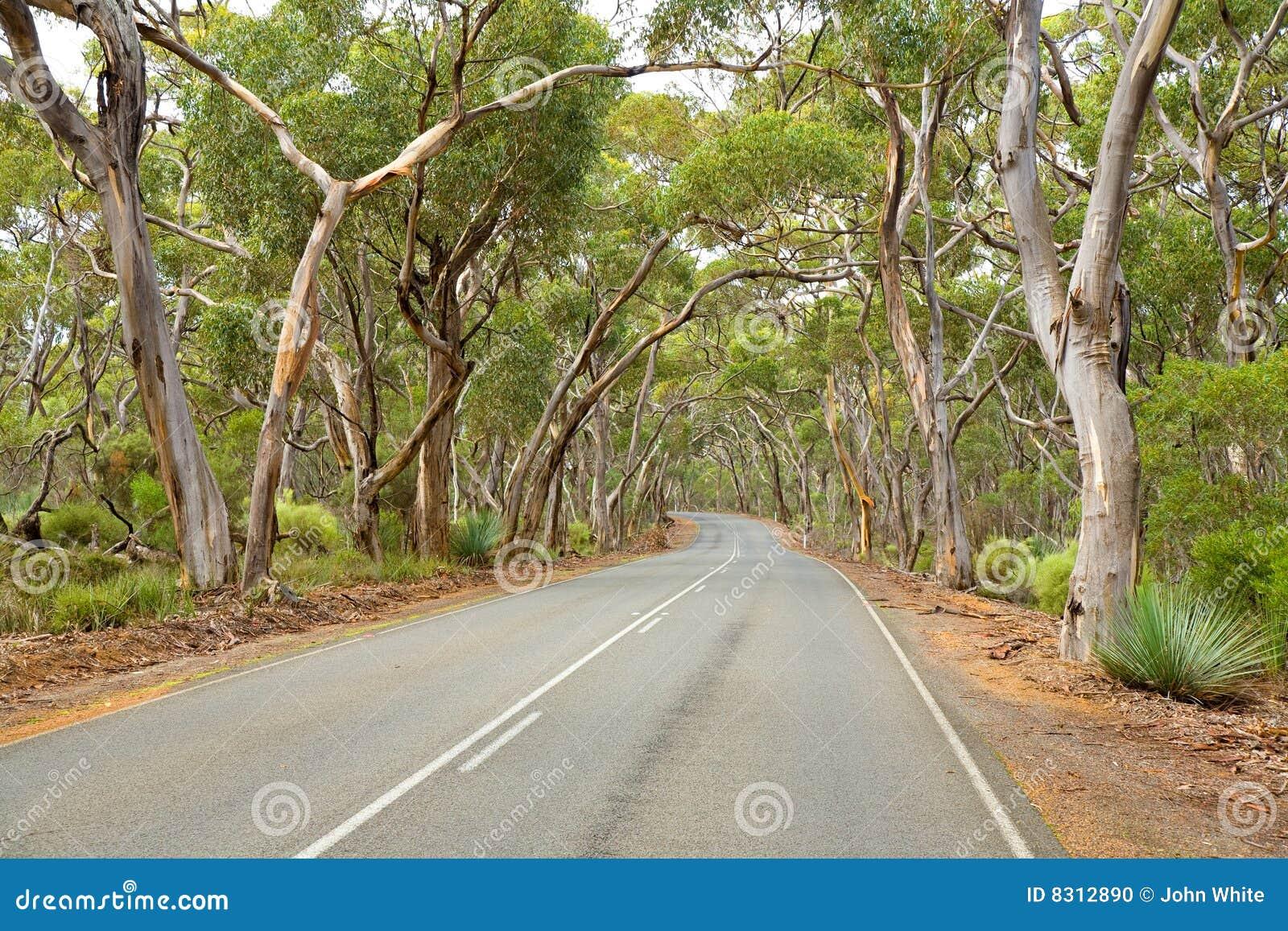 δέντρα οδικού νότου γόμμας