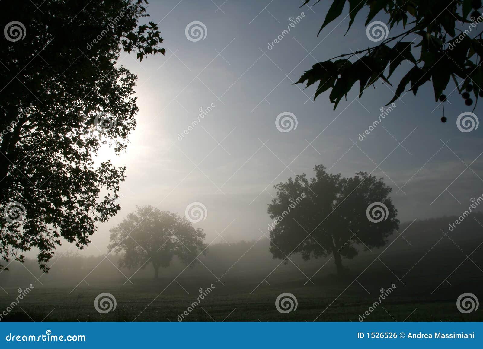 δέντρα ομίχλης