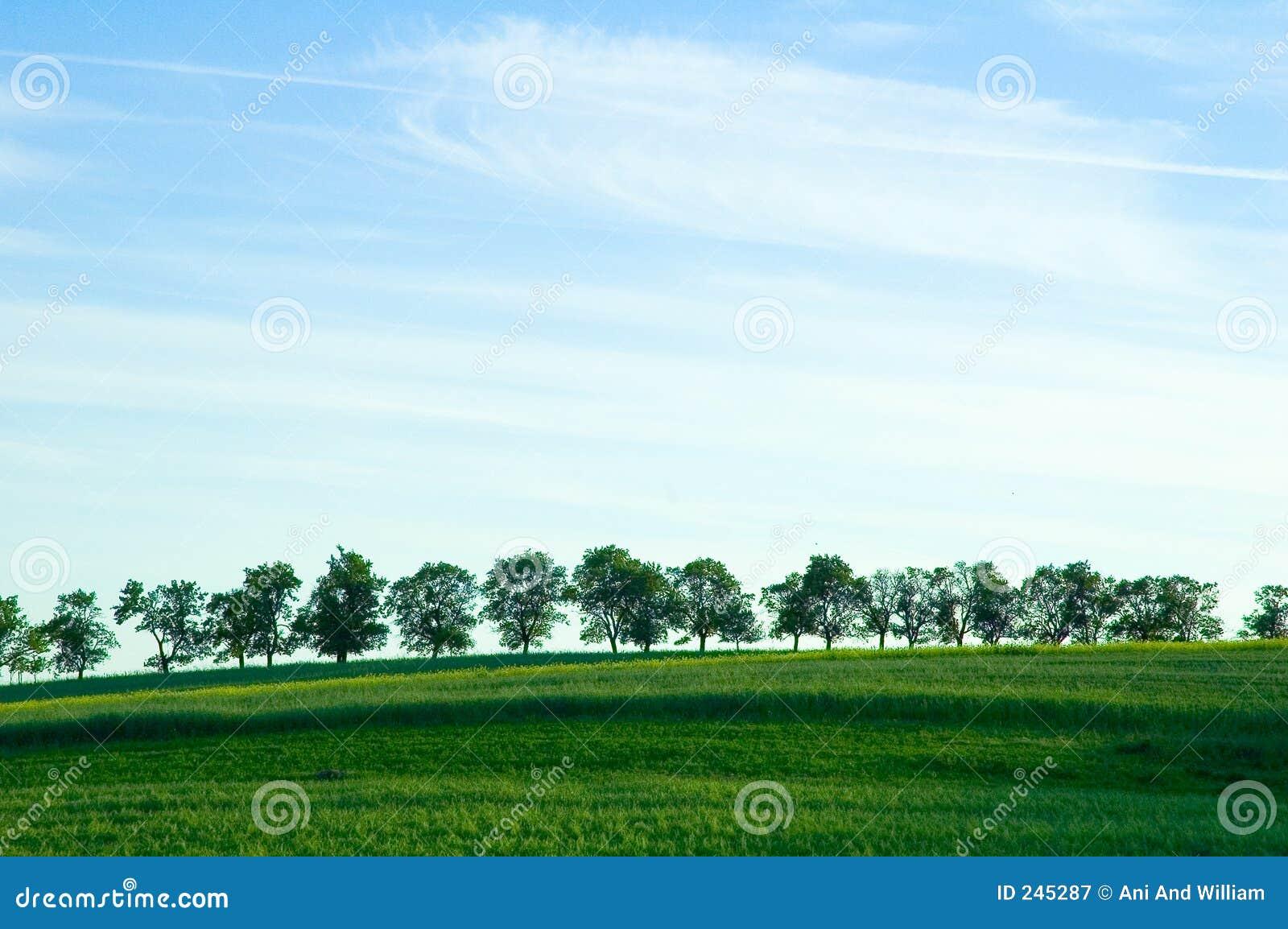 δέντρα οριζόντων