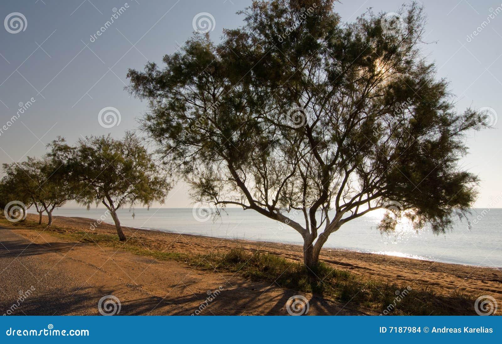 δέντρα παραλιών