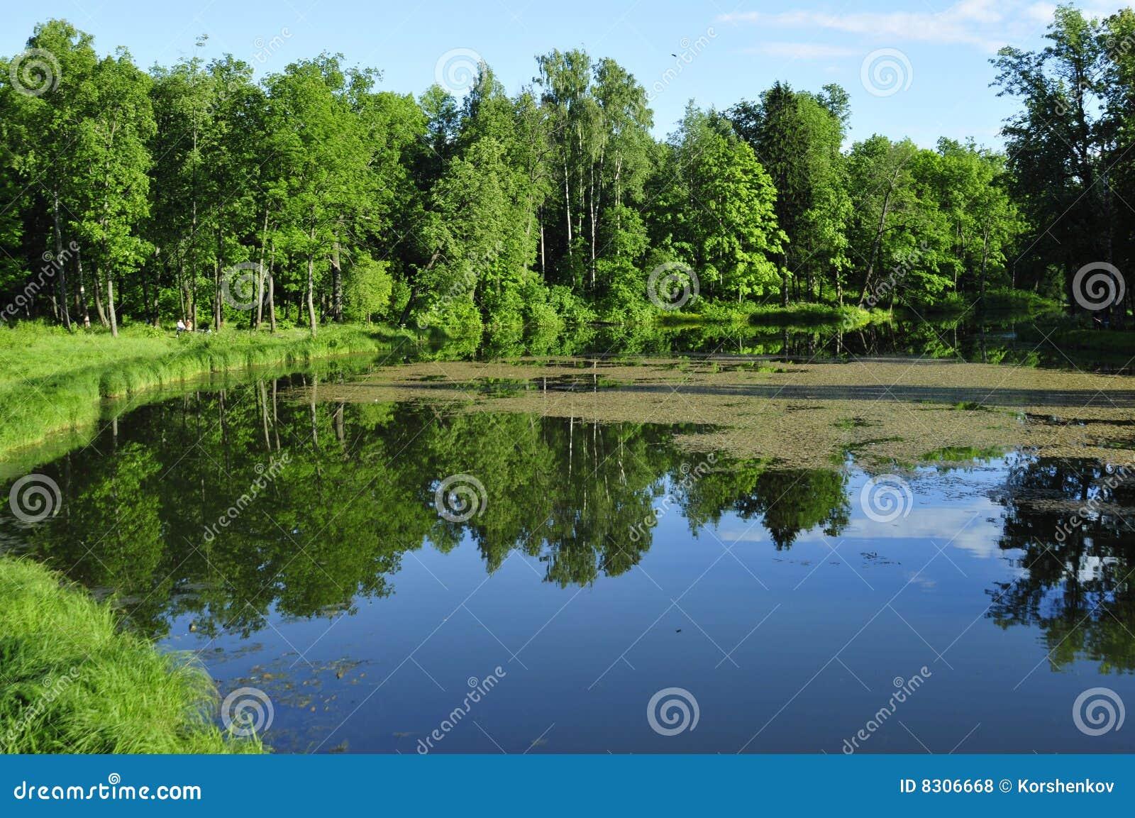 δέντρα ποταμών