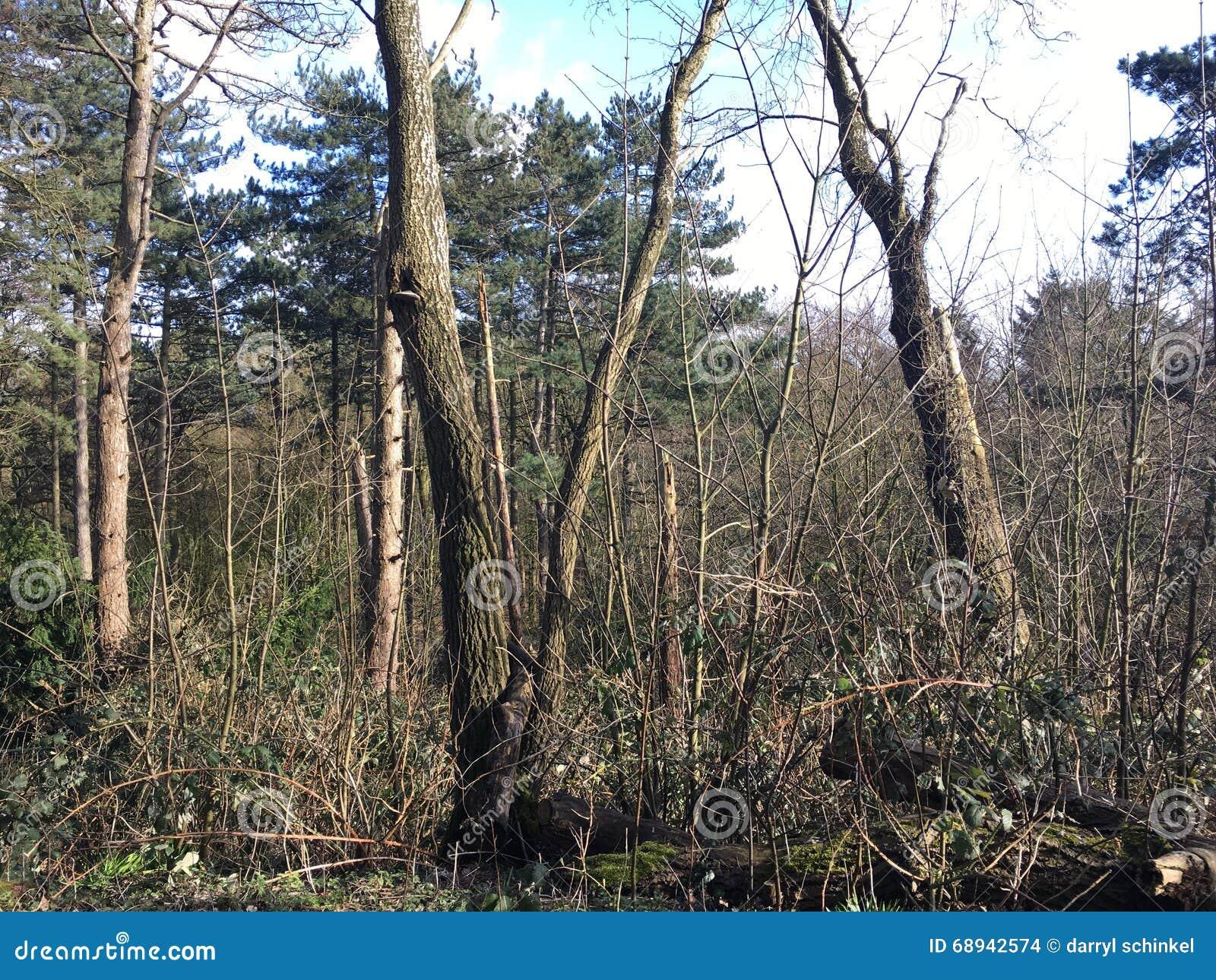 Δέντρα που αυξάνονται επάνω στον ήλιο