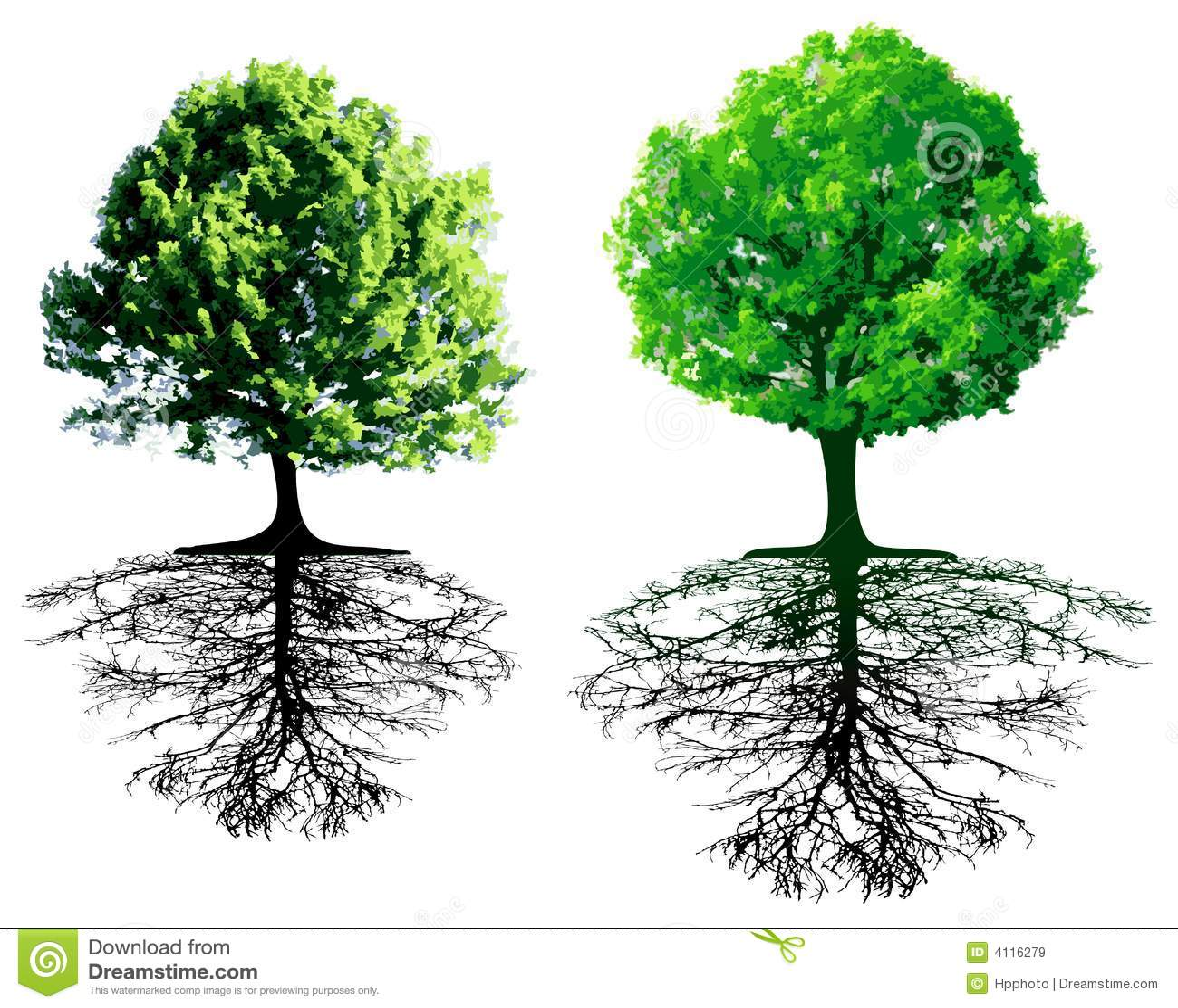 δέντρα ριζών