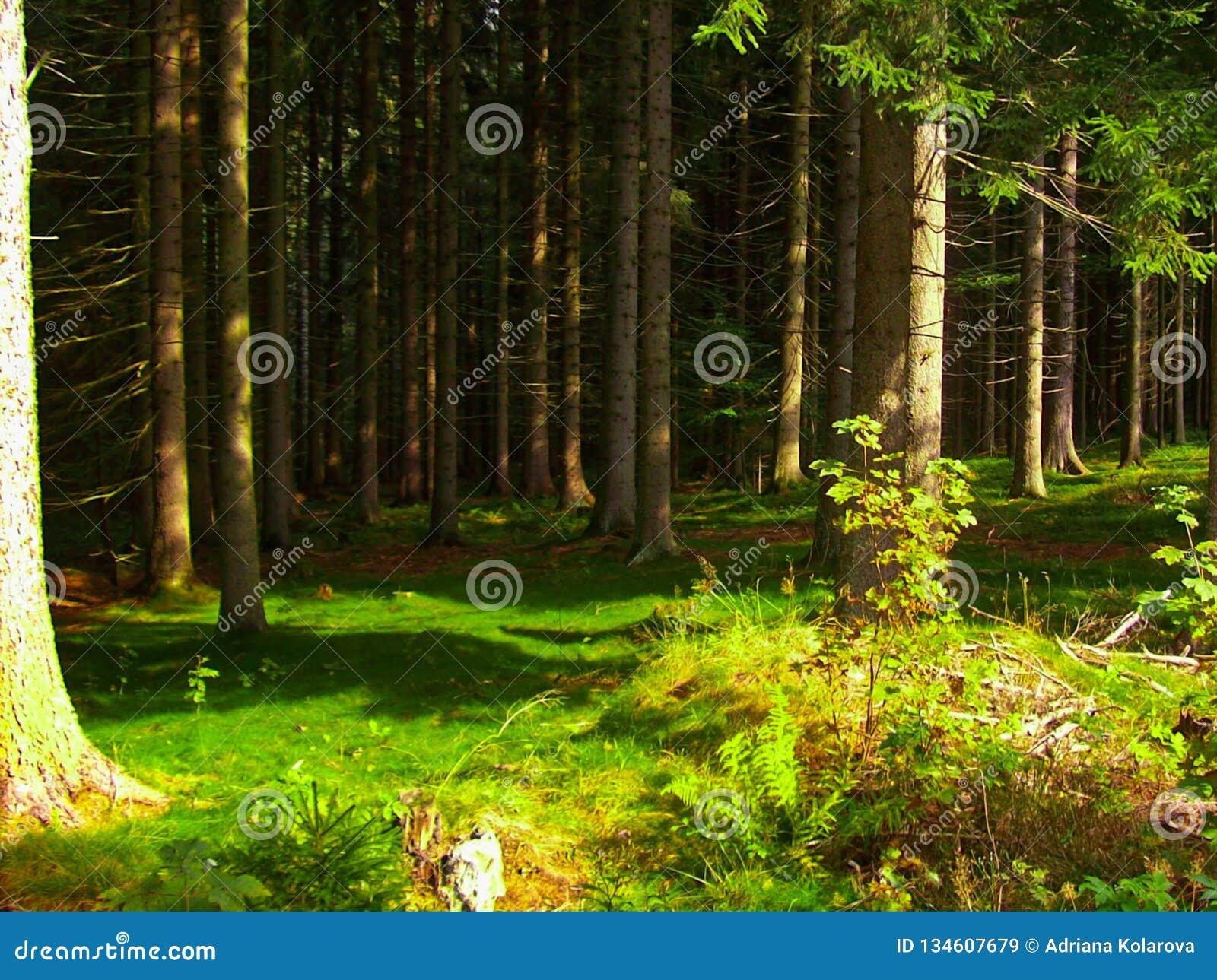 Δέντρα σε ένα πράσινο δάσος