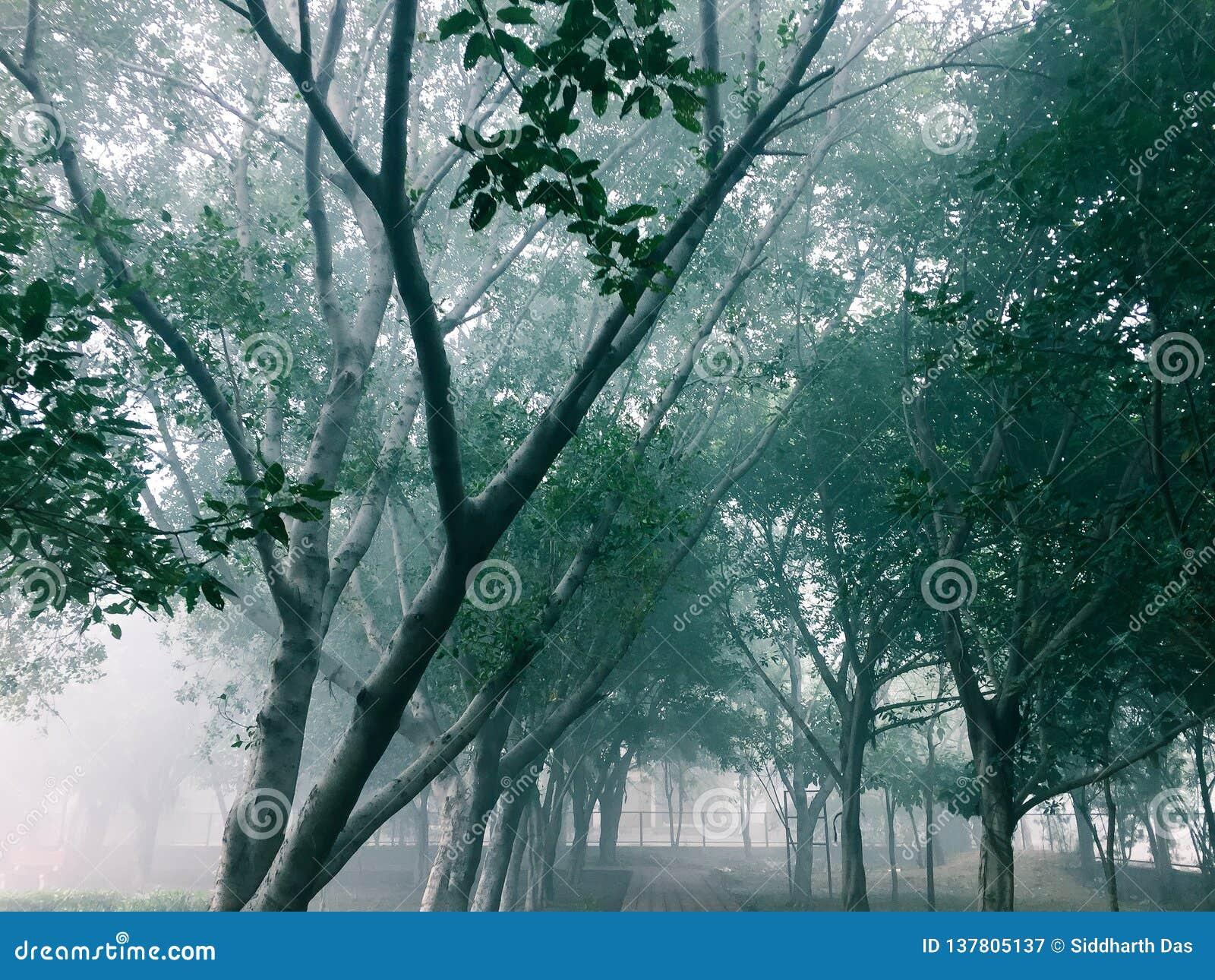 Δέντρα σε μια διάβαση σε μια παιδική χαρά