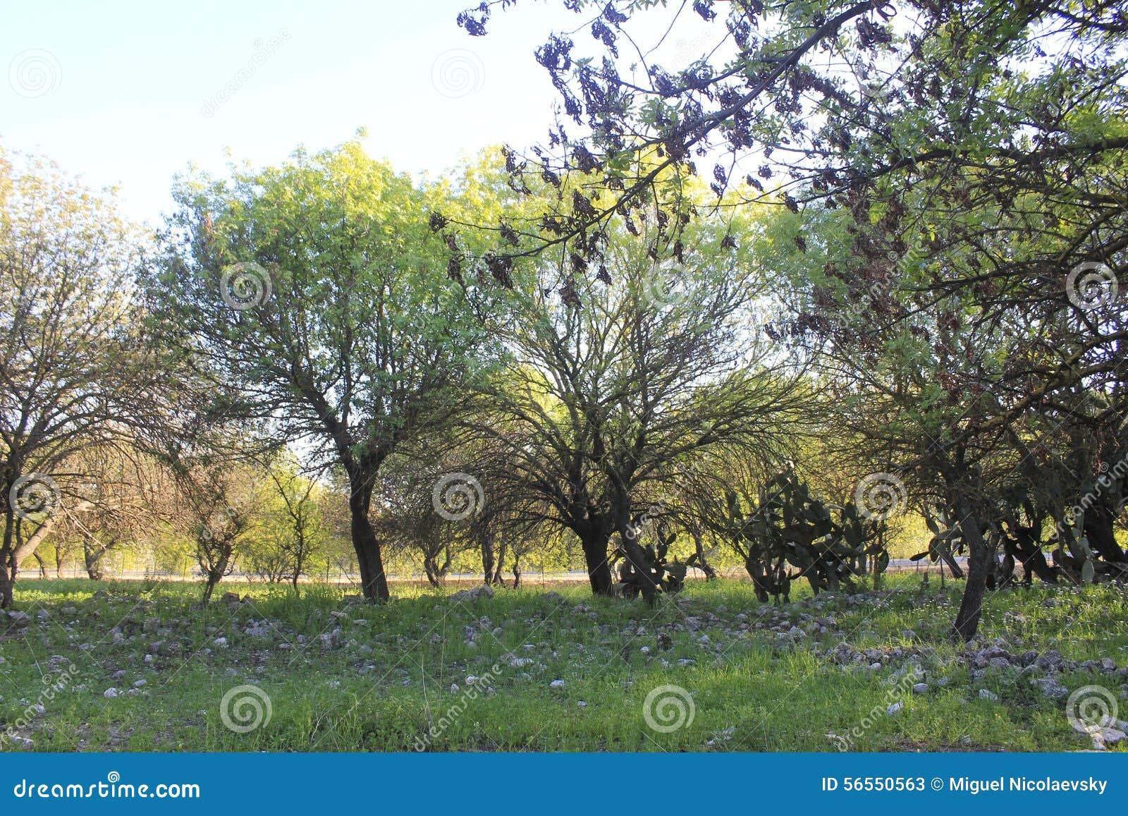 Download Δέντρα στις καταστροφές της αρχαίας πόλης βιβλικού Kedesh στο Ισραήλ Στοκ Εικόνα - εικόνα από εποχή, οριοθετημένα: 56550563