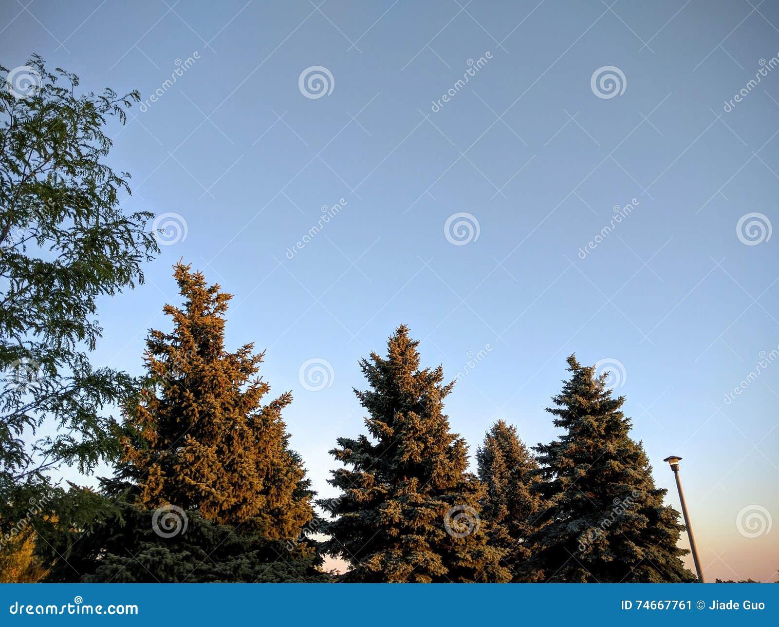 Δέντρα στο ηλιοβασίλεμα