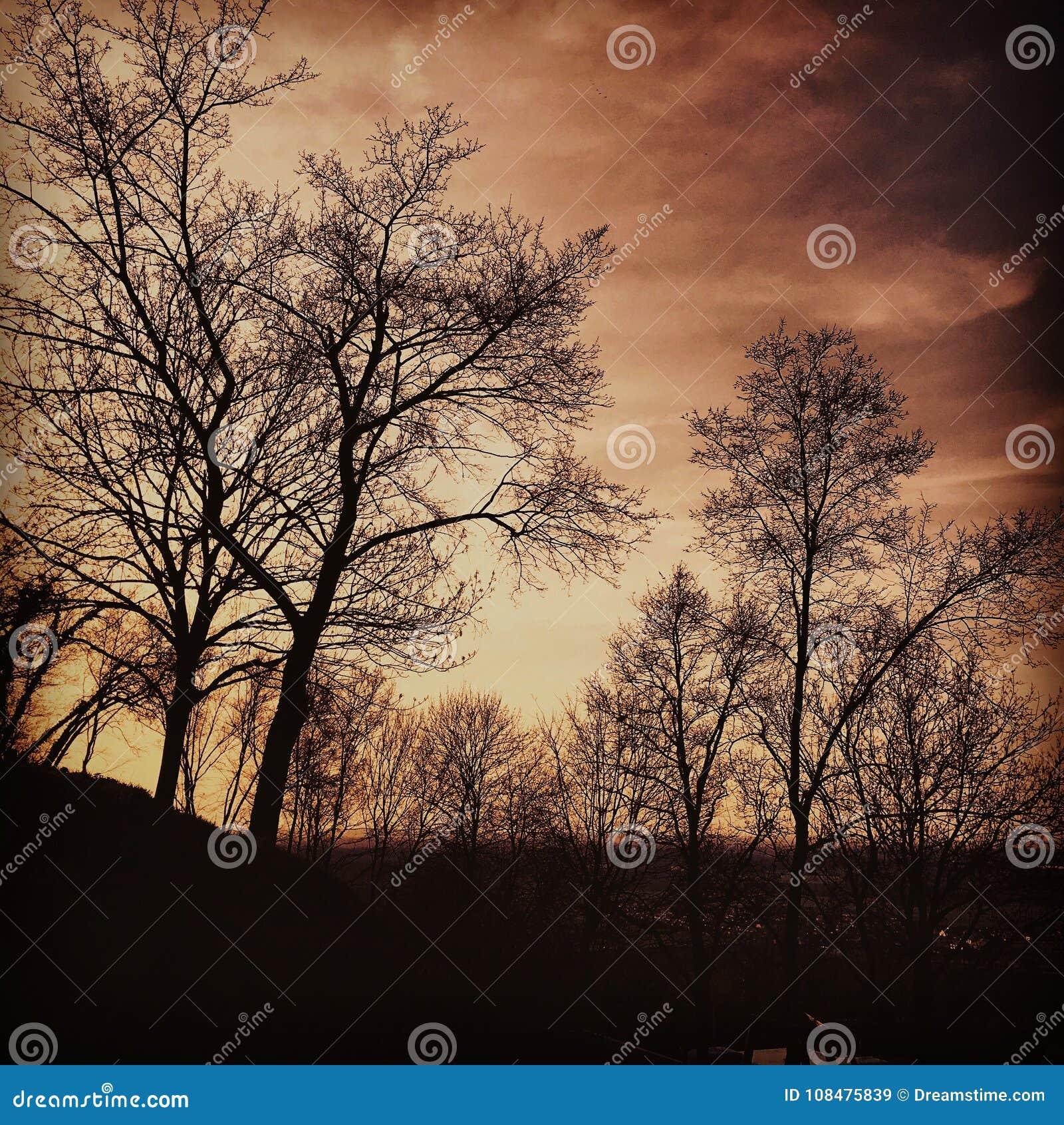 Δέντρα στο σούρουπο