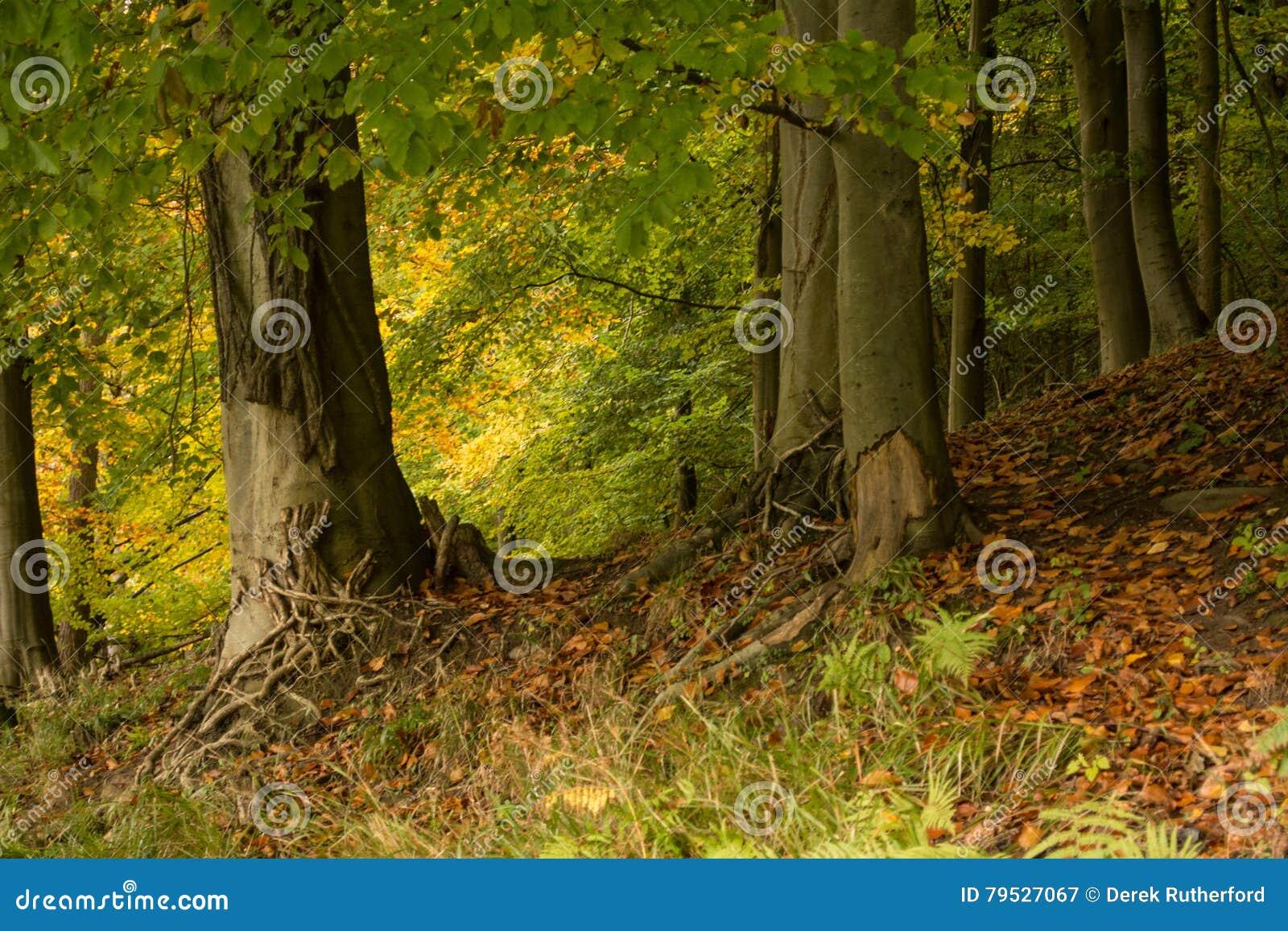 Δέντρα το φθινόπωρο