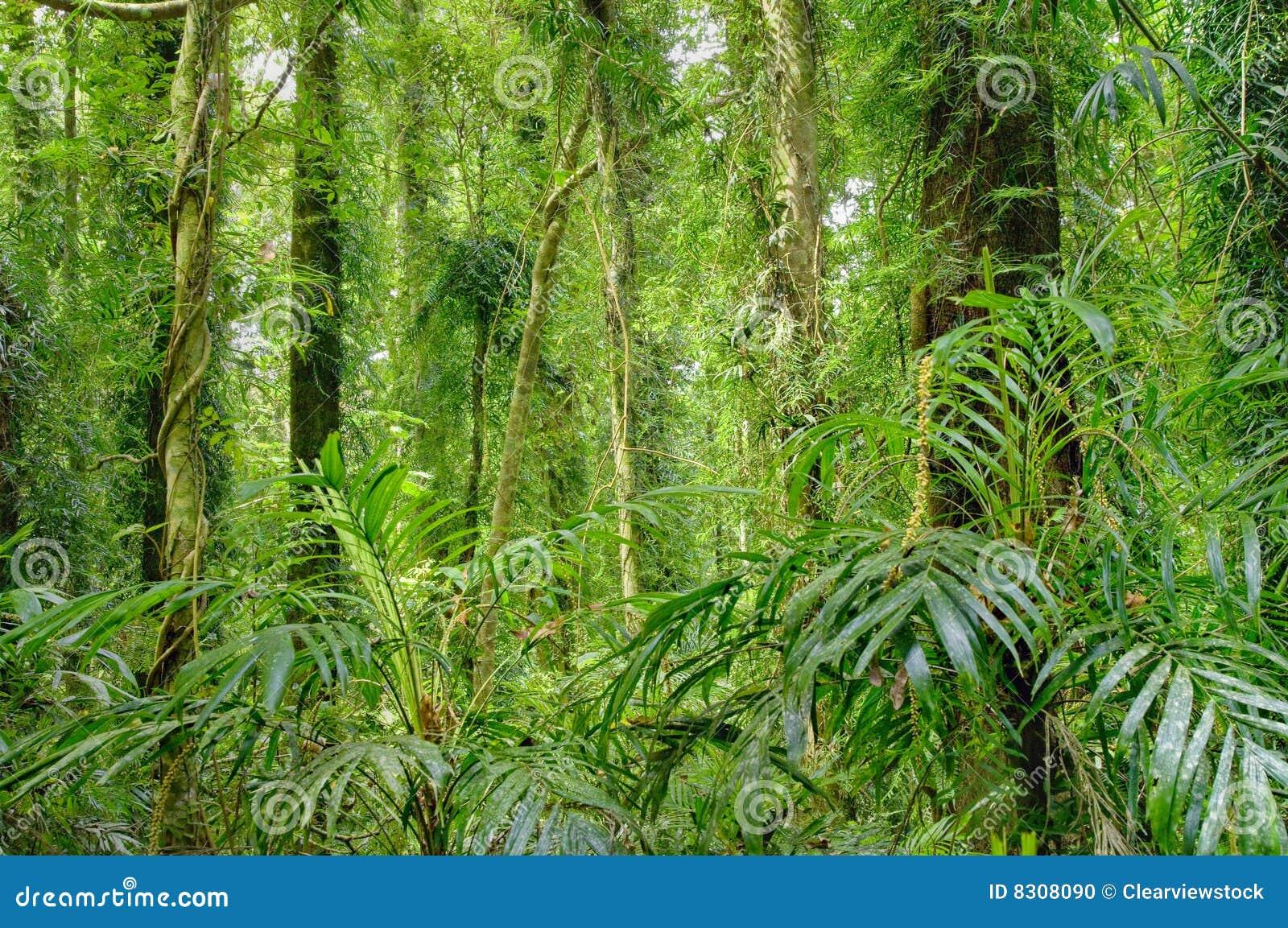 δέντρα τροπικών δασών